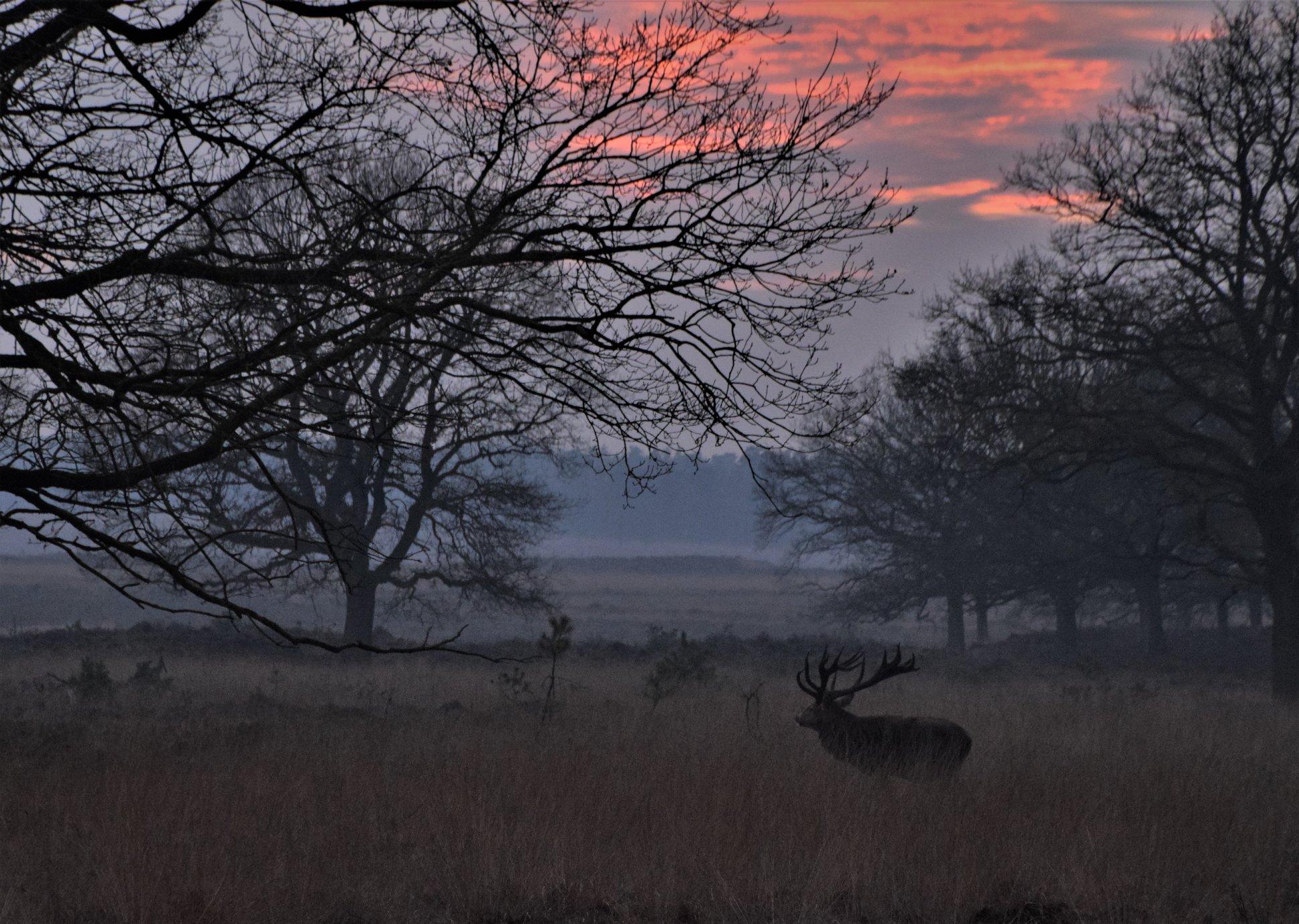 Hubertus op weg naar het open veld – Foto: ©Nel Vlieland