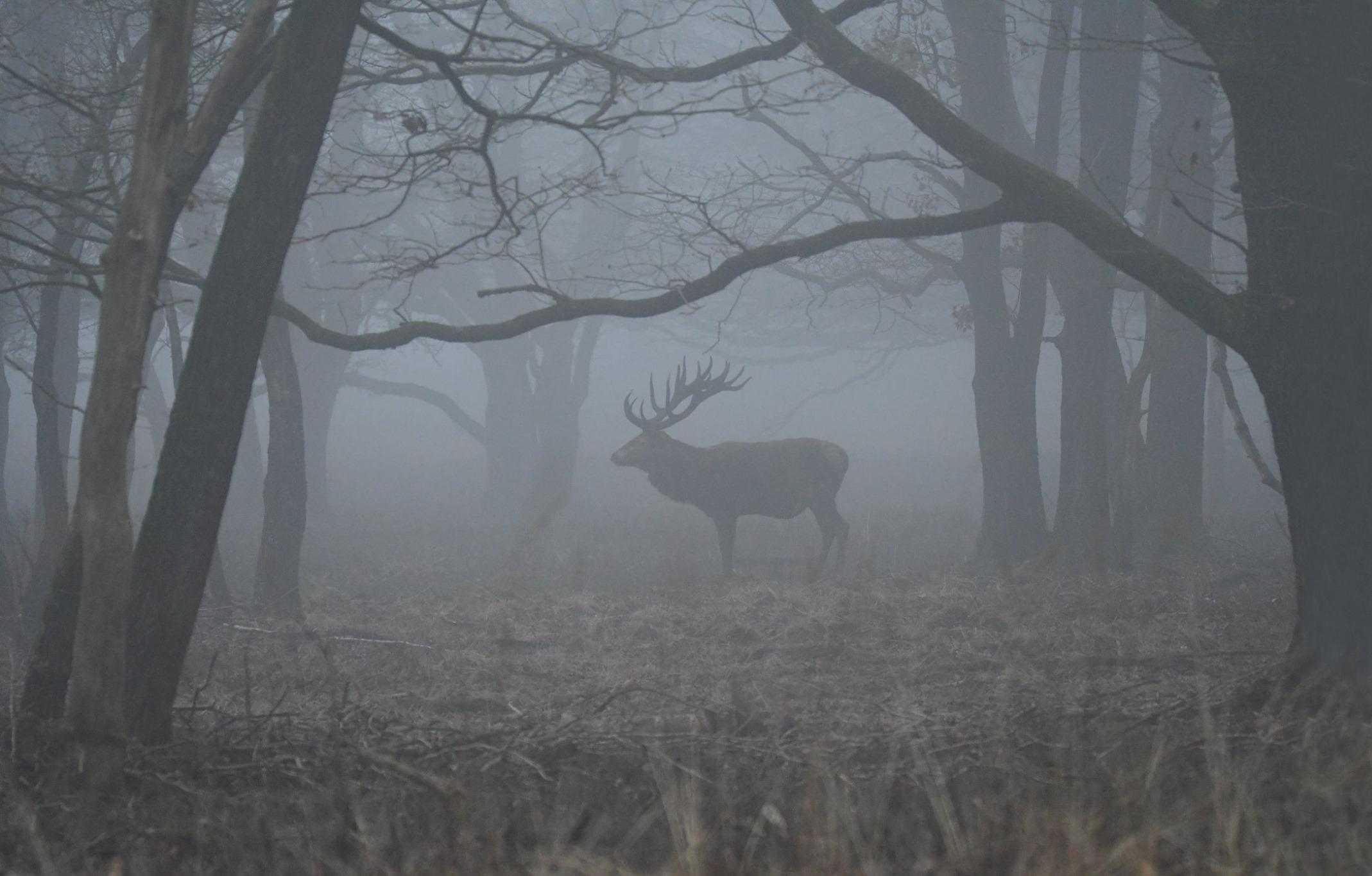 Een prachtig moment als Hubertus vanuit de mist tevoorschijn komt – Foto: ©Nel Vlieland