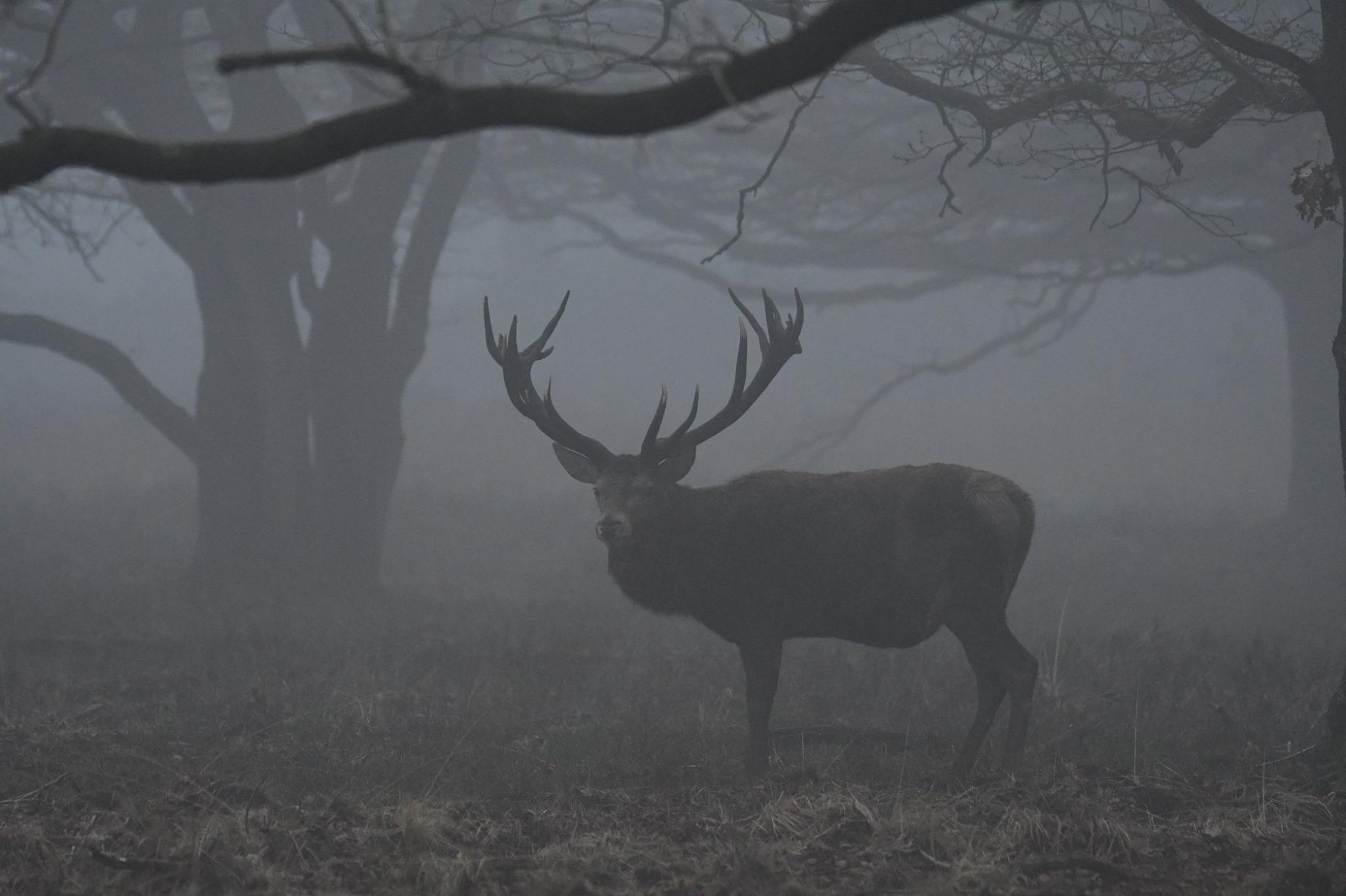 Zo staat hij een tijdje in mijn richting te kijken – Foto: ©Nel Vlieland