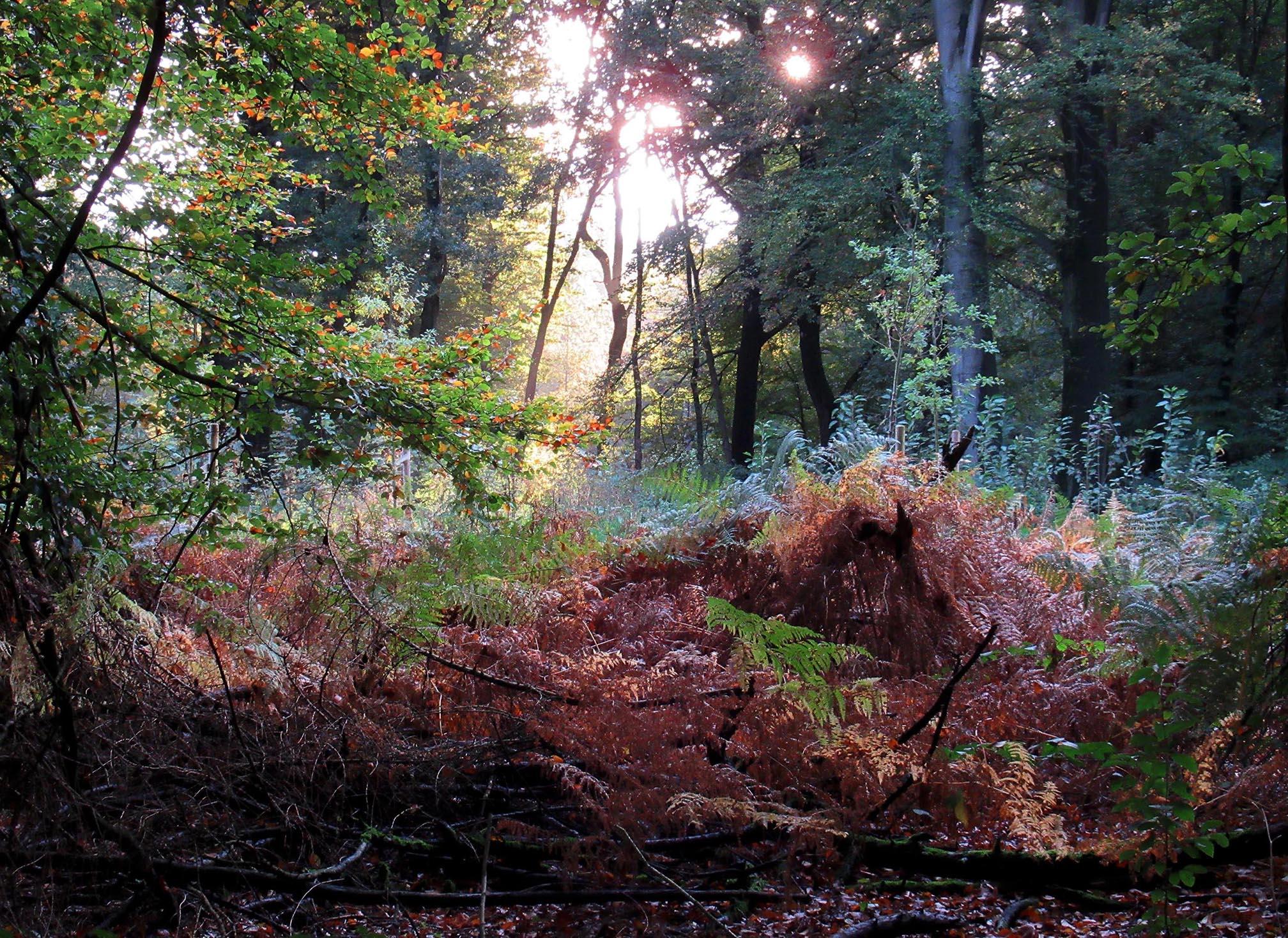Takken en resthout hebben dus een essentiële betekenis voor de groei van bomen en andere onderdelen van het ecosysteem - Foto: ©Louis Fraanje