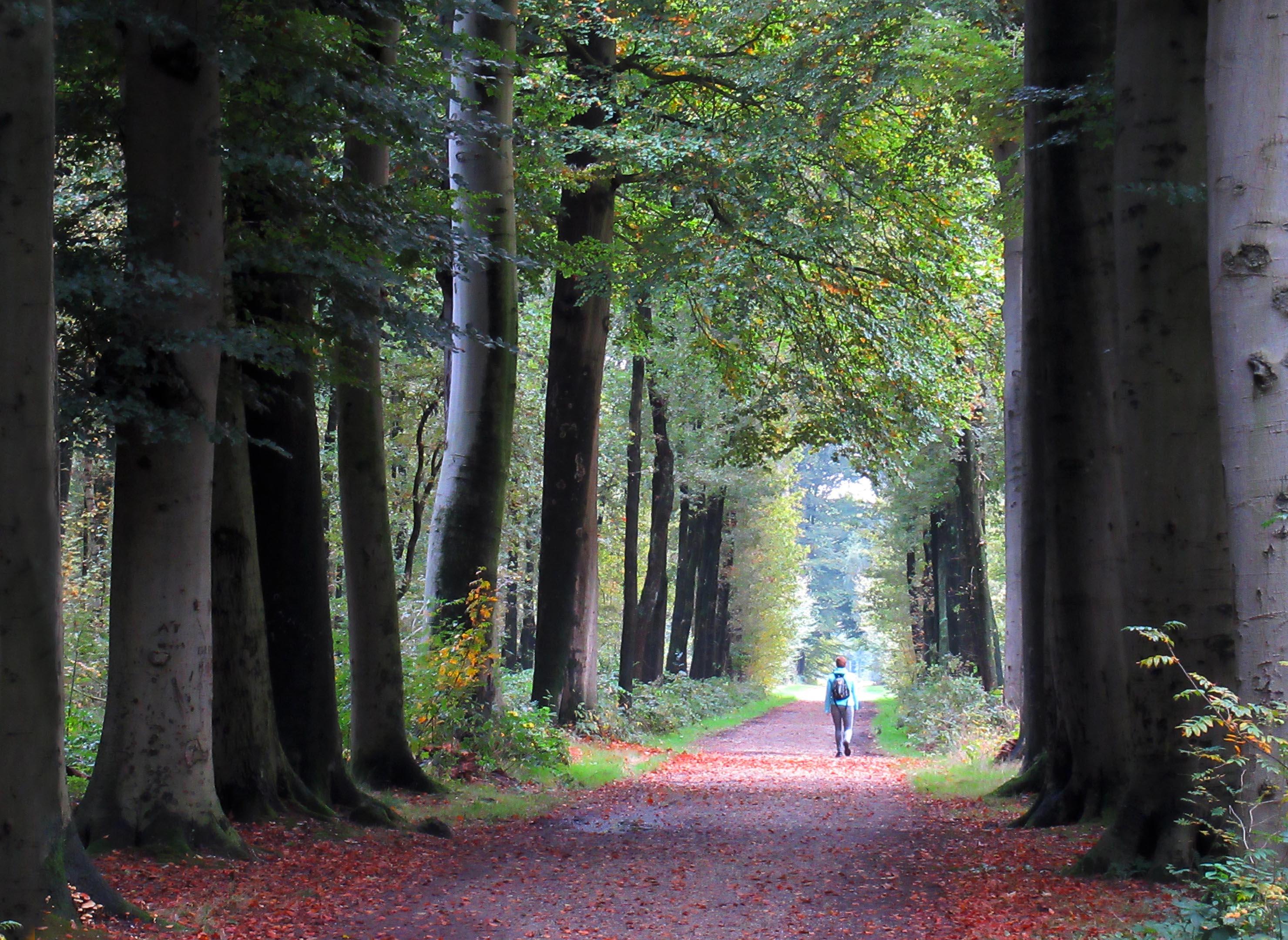 Oudere bossen zijn belangrijk met betrekking tot de opname capaciteit voor CO2 - Foto: Louis Fraanje: