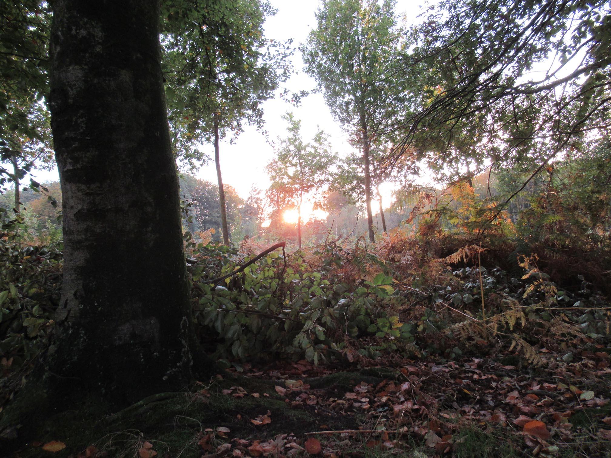 Een mozaïek van bostypen, in bosbouwtermen heet dat de lopende aanwas - Foto: ©Fransien Fraanje