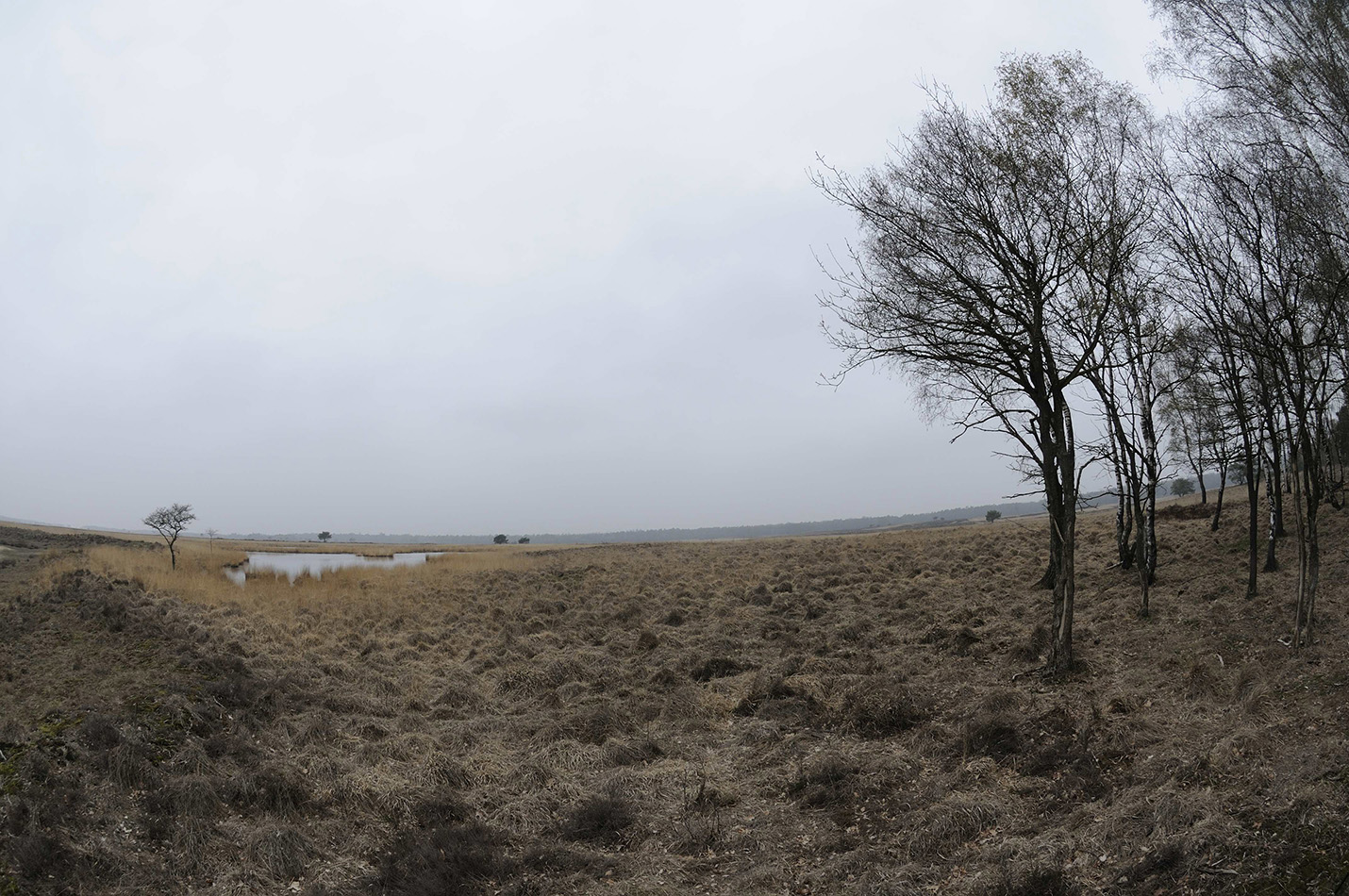 De Gietense Flessen liggen op een richel aan de noordoostkant van het Deelense Veld. Het Gietense Bos, dat tussen de vennen en de berken rechts op de foto stond is lang geleden al gekapt – foto: Yvonne Arentzen