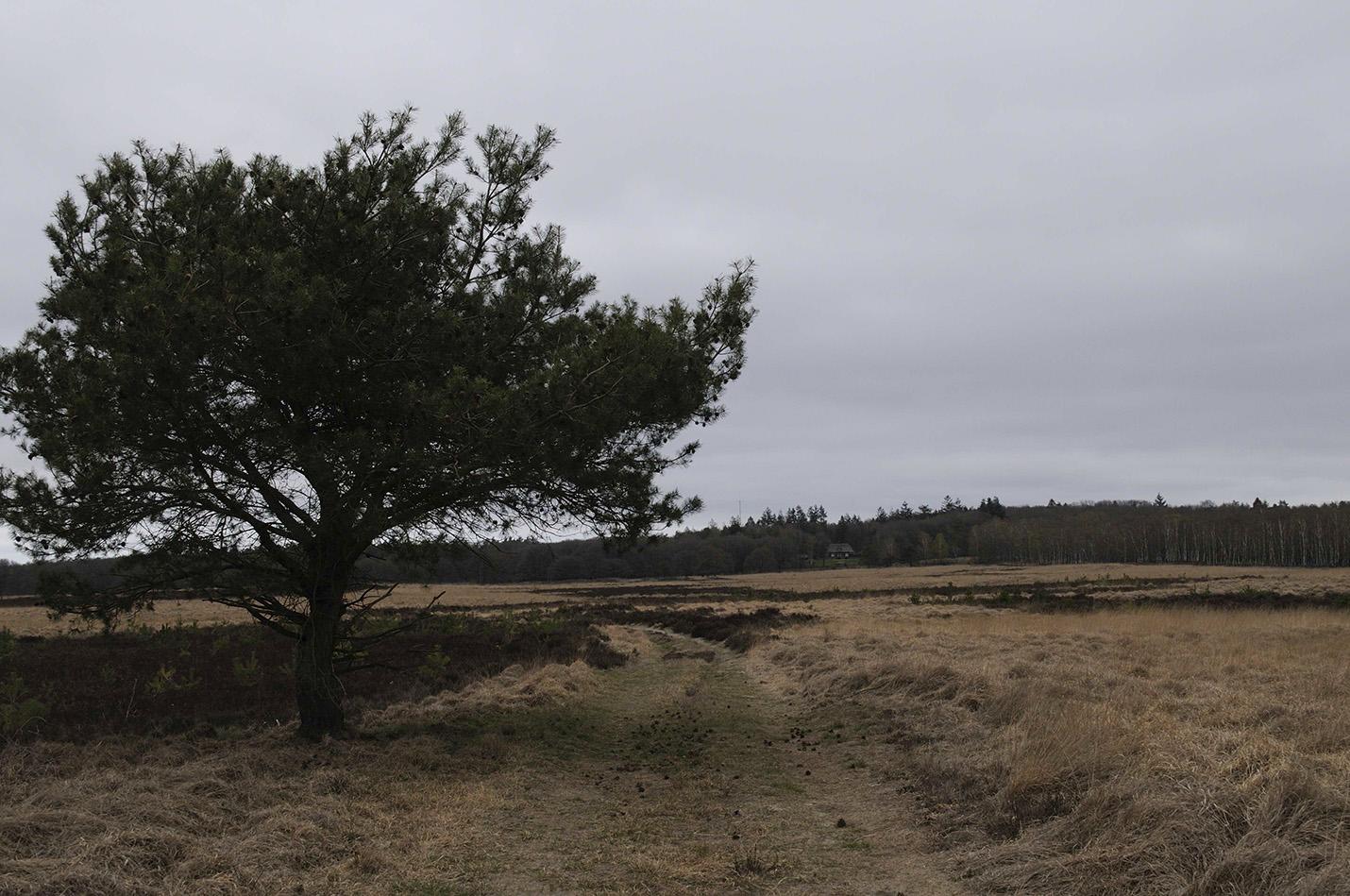 """De houtafvoerweg? in westelijke richting gezien; links was het Gietense Bos, rechts Cladder's Bos. In de verte is """"De Roek"""" zichtbaar – Foto: Yvonne Arentzen"""