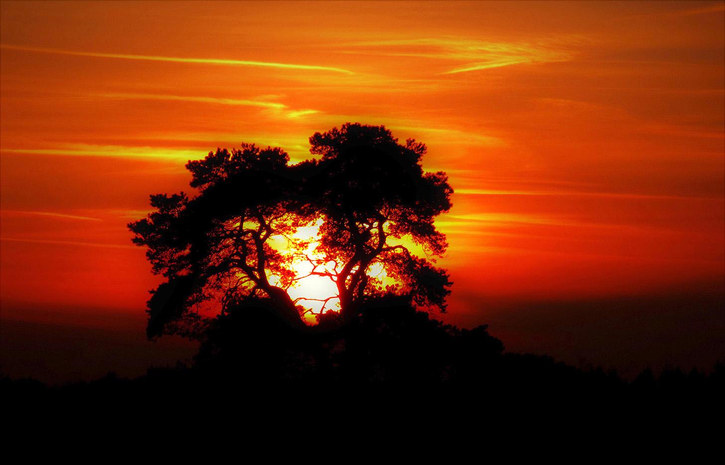 Zonsondergang op de Veluwe - Foto: ©Louis Fraanje