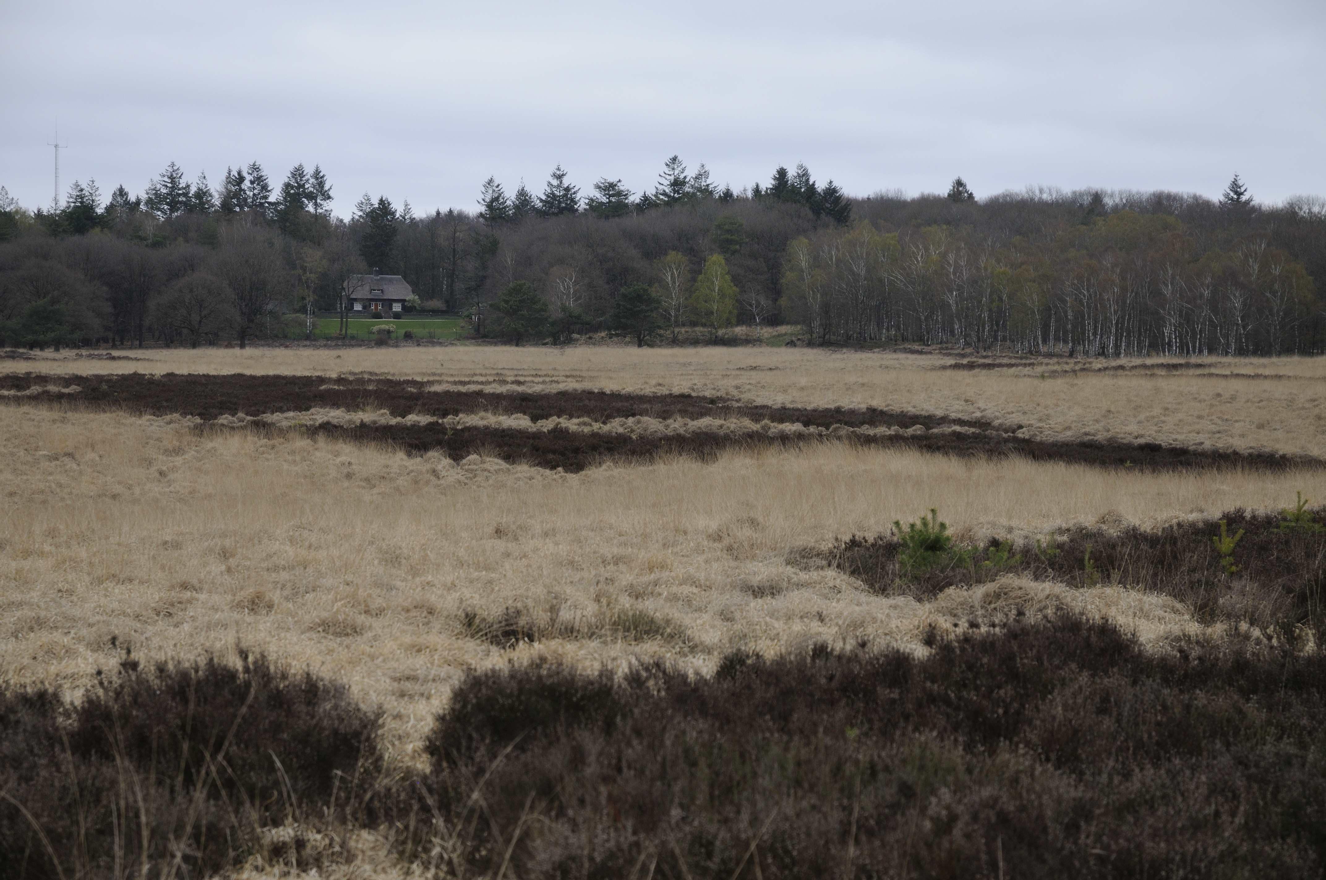 """Uitzicht op """"De Roek"""" vanaf het Deelense Veld. Aan de voet van het erf het inmiddels deels met bomen begroeid geraakte open veld, waar de herten volgens Wigman in eerste instantie naartoe trokken – Foto: Anja Arentzen"""