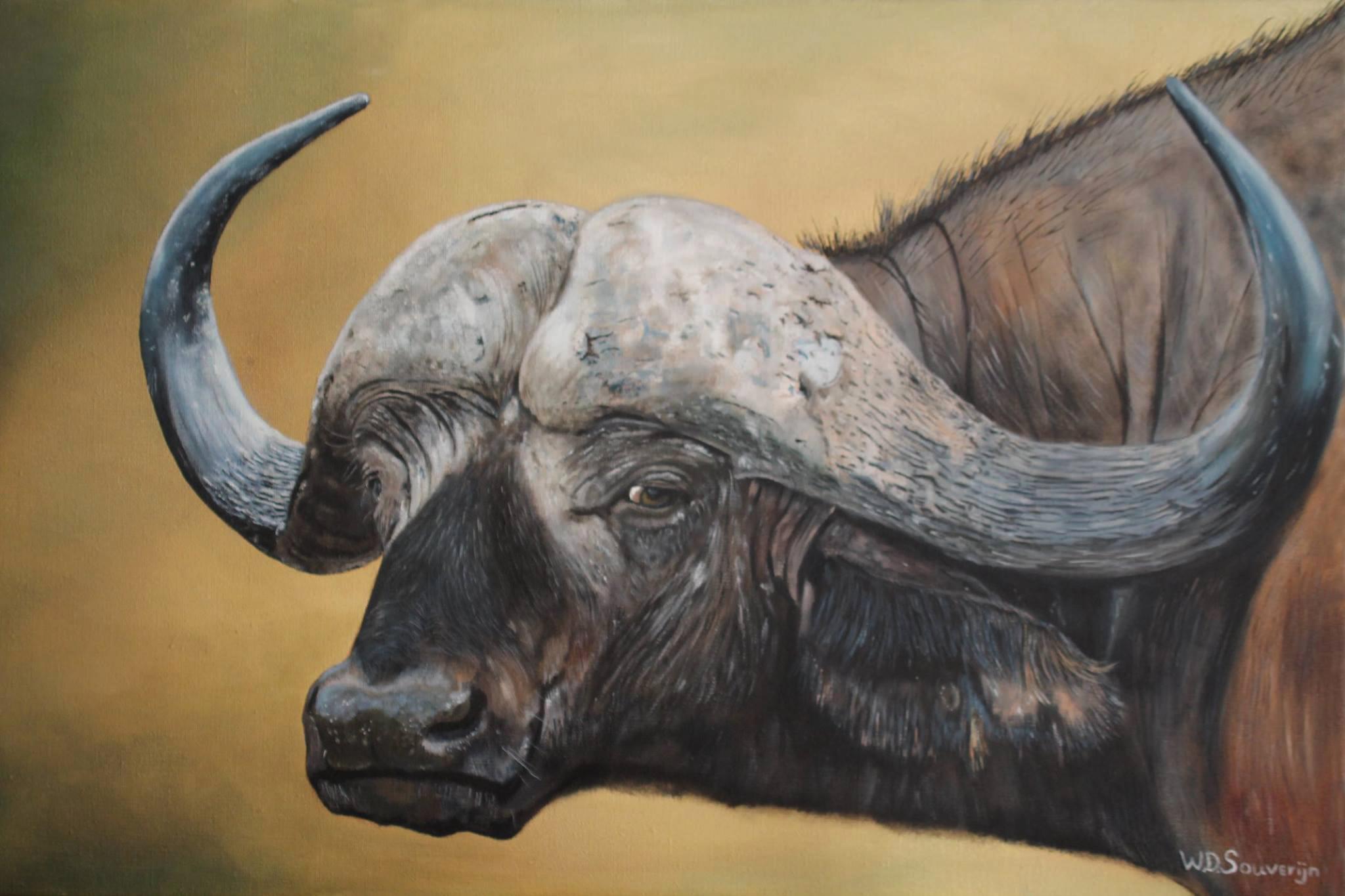 Afrikaanse buffel - Beeld: Willem Souverijn