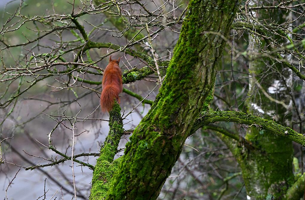 En voordat we het goed en wel in de gaten hebben, is hij plotseling spoorloos verdwenen- Foto: © Louis Fraanje
