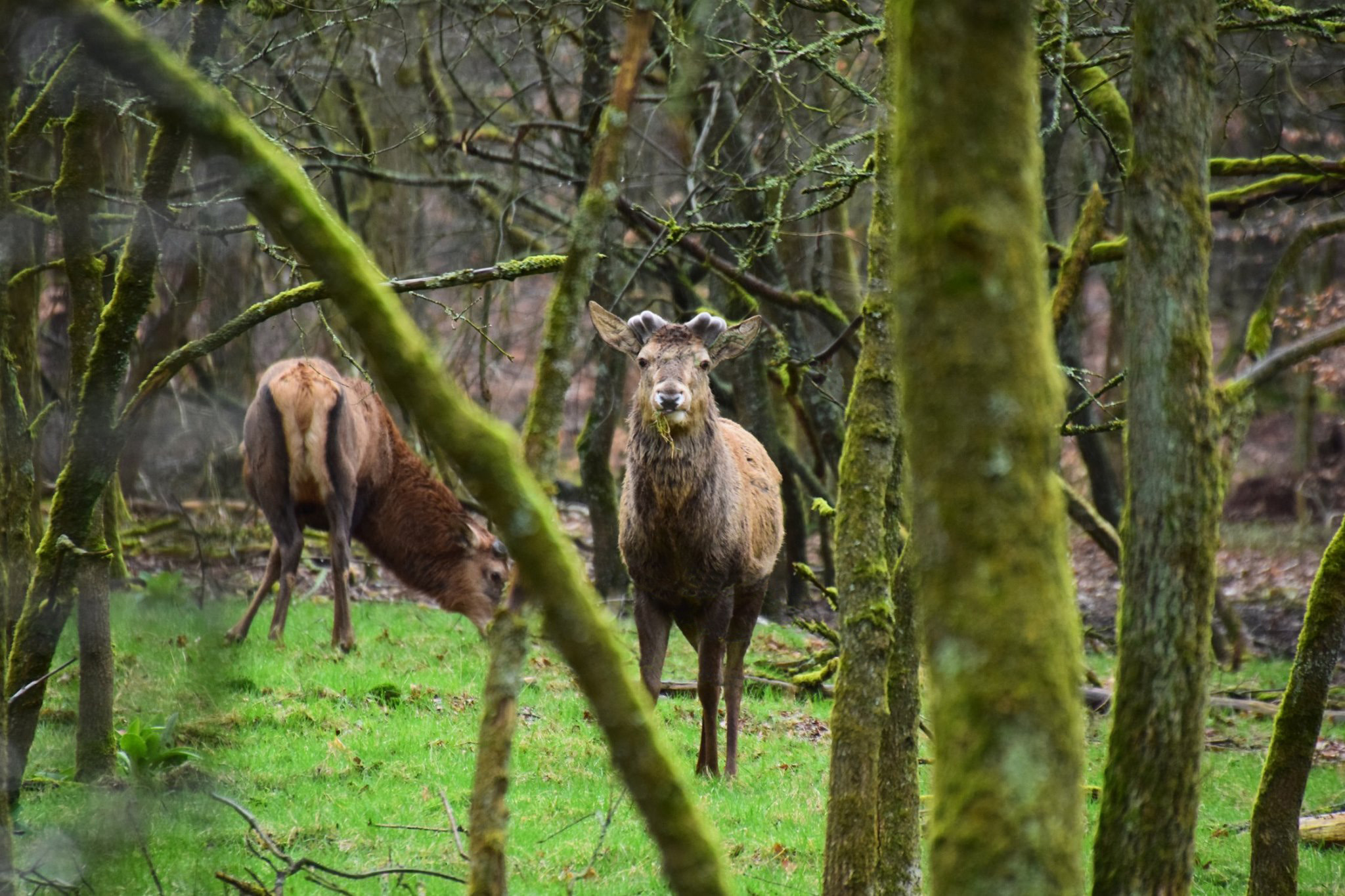 Daar stond hij in de stromende regen samen met zijn compagnon - Foto: ©Henny van Soest