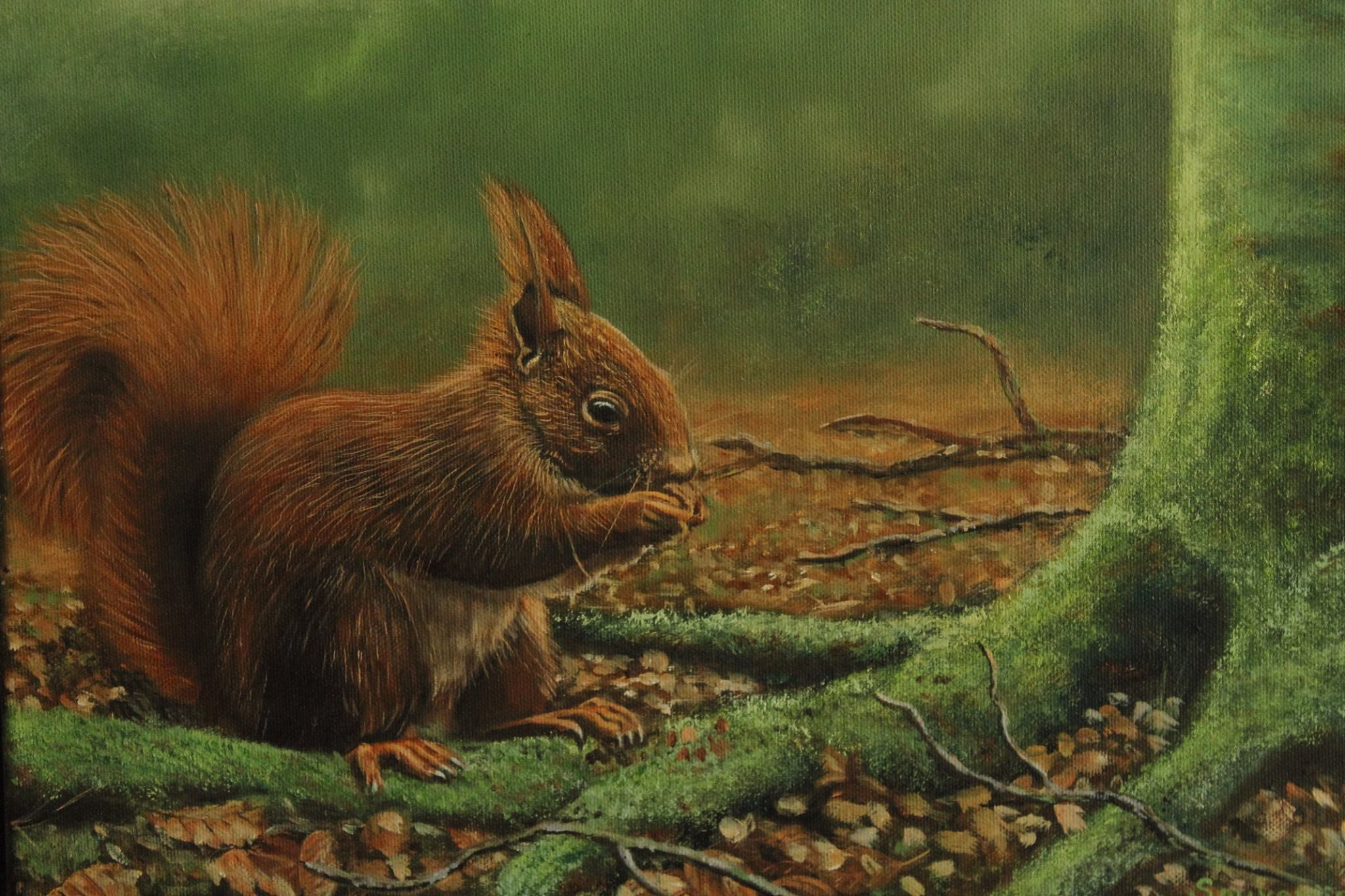 Een eekhoorn in het herfstbos - Beeld: ©Willem Souverijn