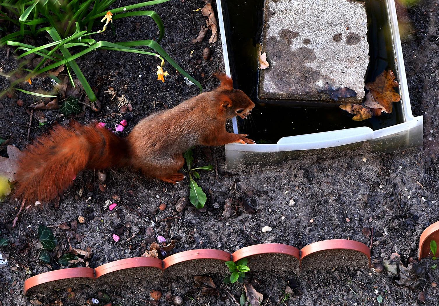 Even de dorst lessen bij de waterbak op de grond - Foto: ©Louis Fraanje