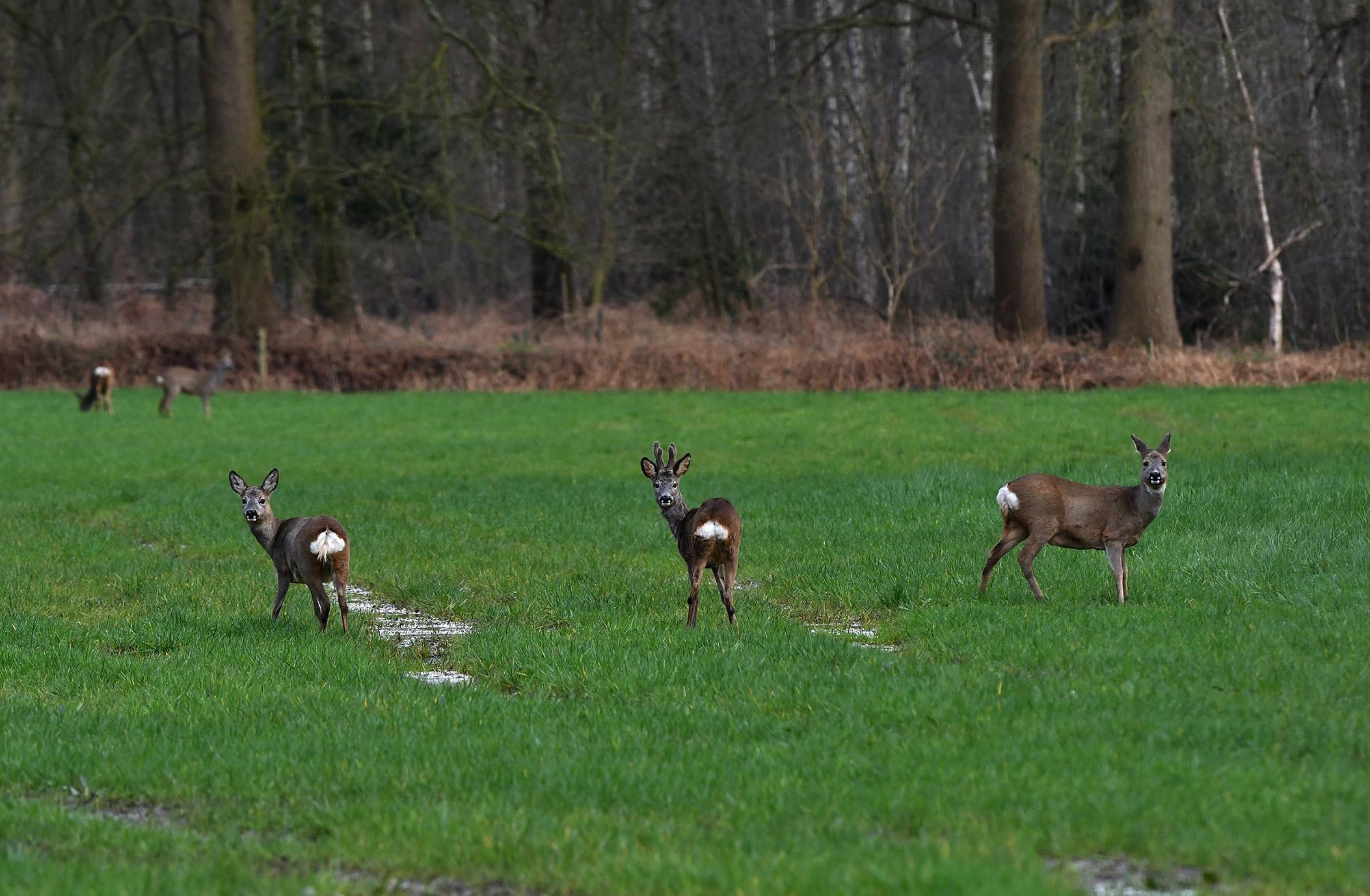 Nieuwsgierig staan ze in mijn richting te kijken - Foto: ©Louis Fraanje