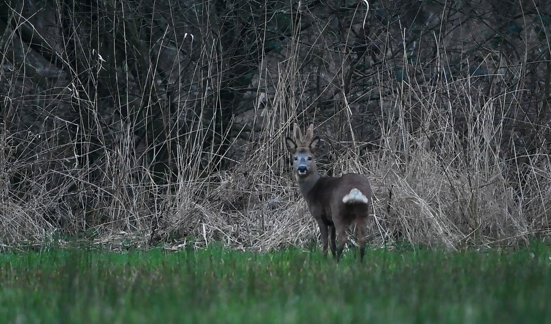 Heel even staan we 'oog in oog' en lijkt het of hij ons ziet... - Foto: ©Louis Fraanje