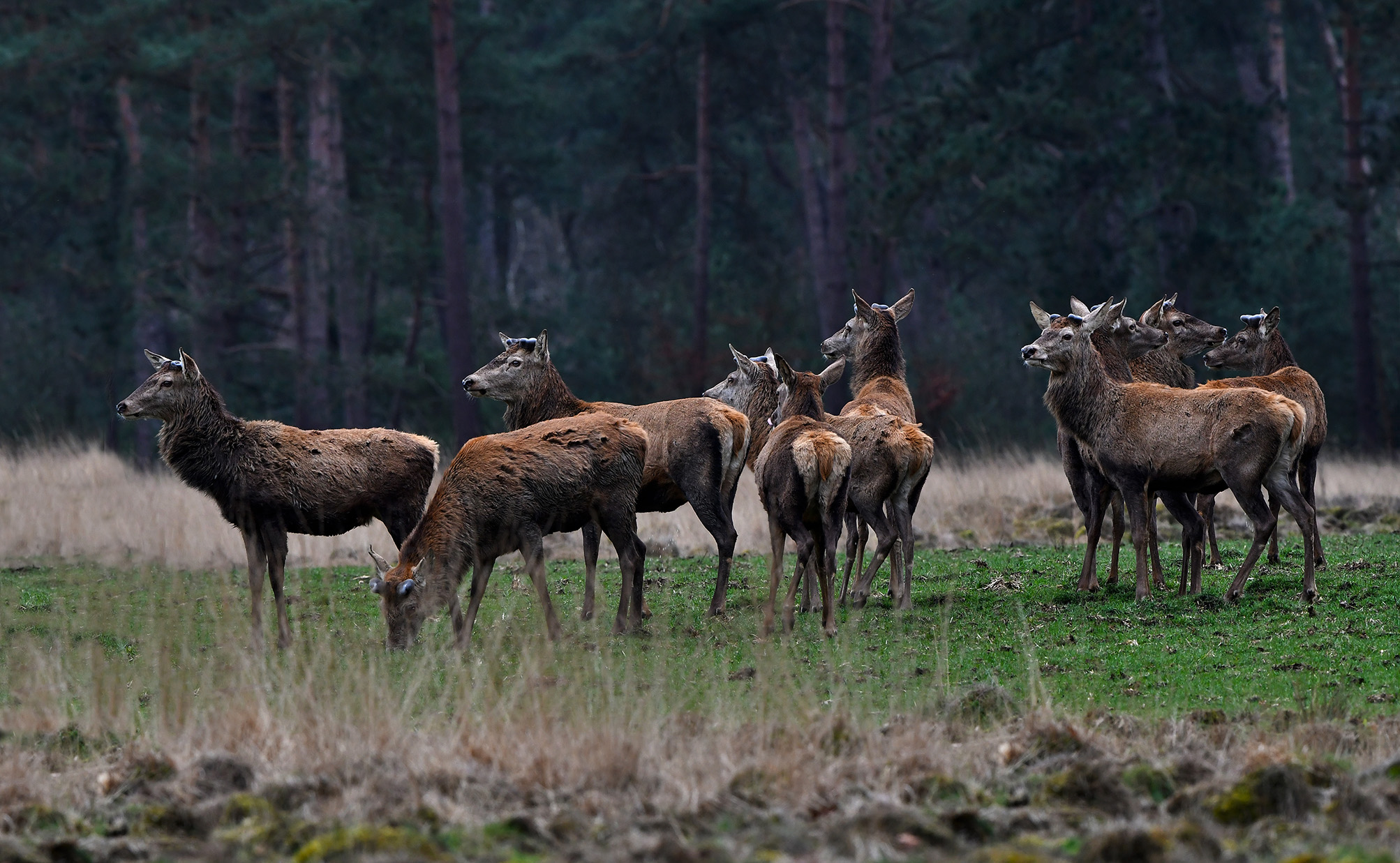 Zo staat het roedel 'kale' mannen om zich heen te kijken, het is maar een kale boel zo - Foto: © Louis Fraanje