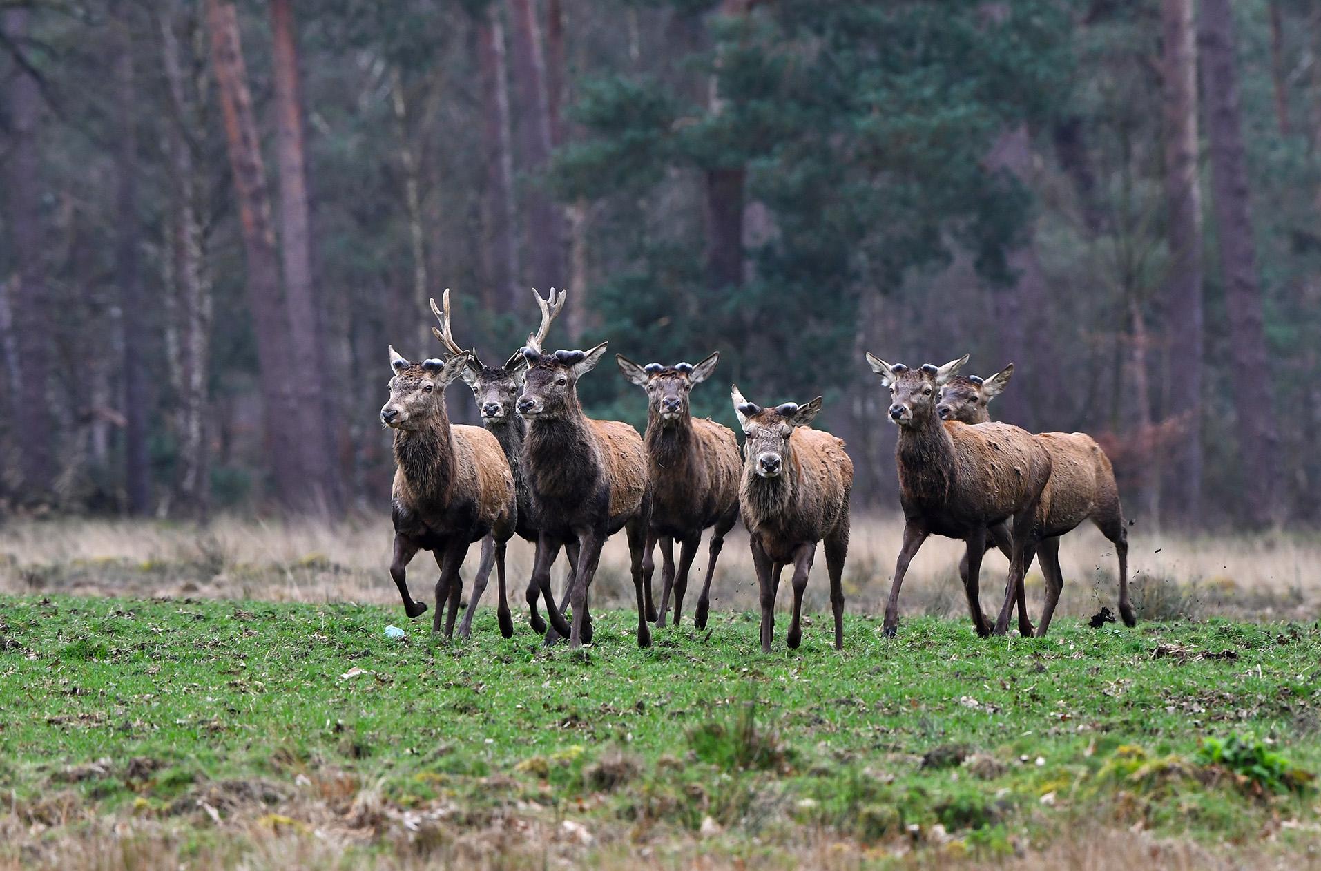 Daar komen de 'kale' heren het Zwarte Veld op - Foto: © Louis Fraanje