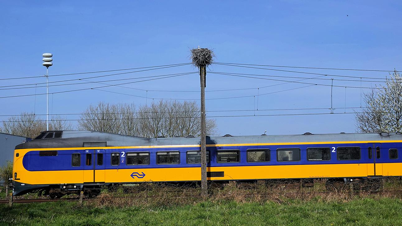 Het ooievaarsnest zit hoog en droog op de bovenleidingsmast - Foto: ©Jan vanUffelen