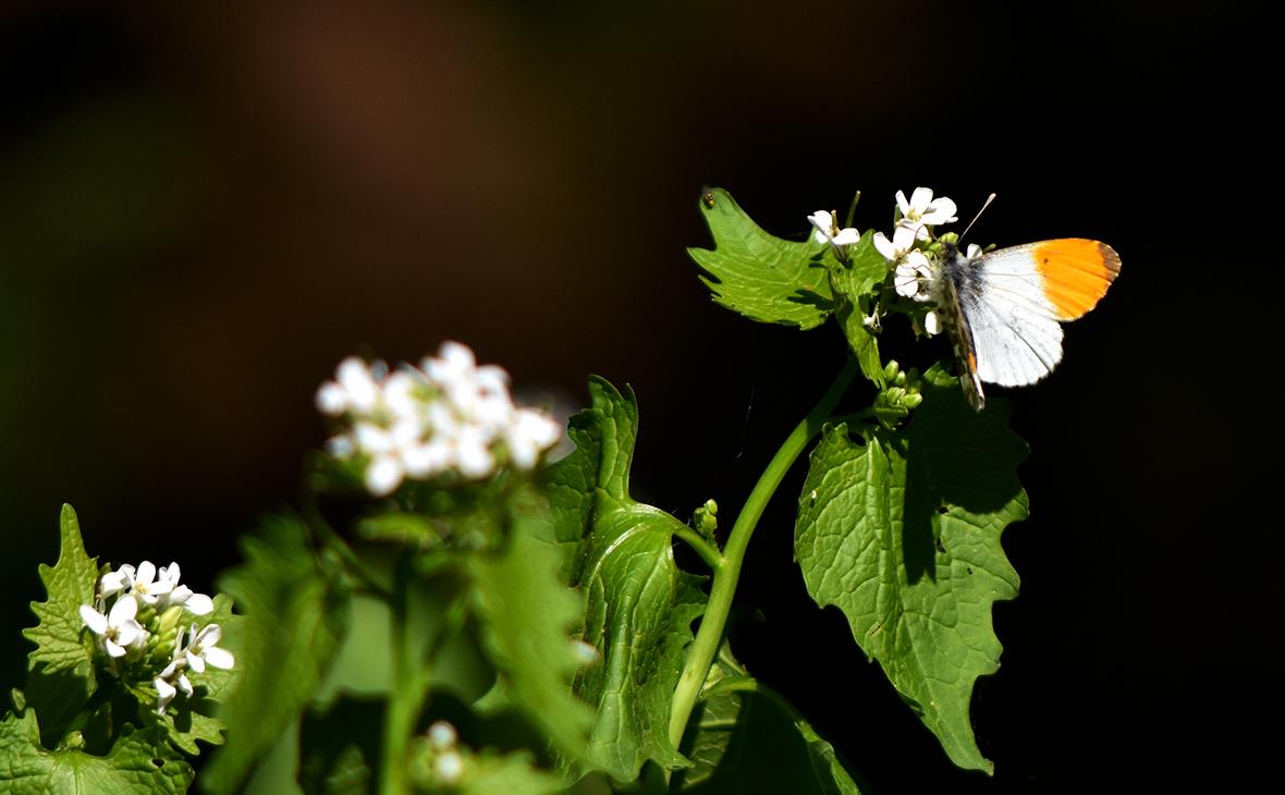 En maakte een perfecte landing op de bloemetjes - Foto:© Louis Fraanje