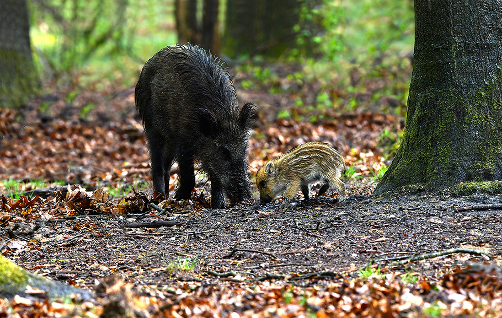 Groot en klein... wat een verschil - Foto: © Louis Fraanje