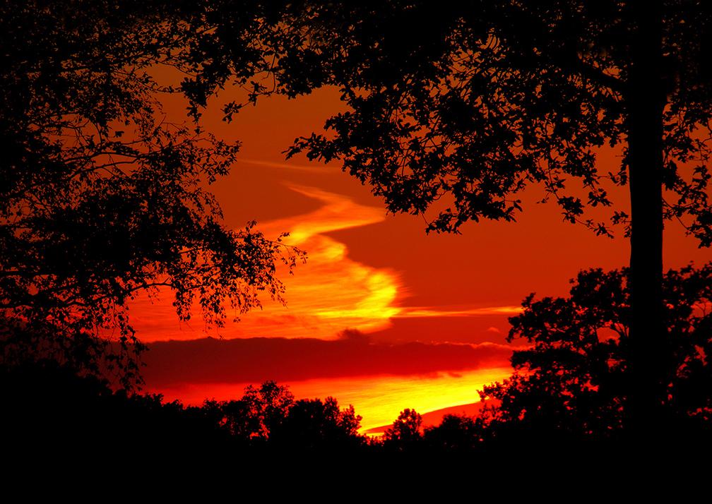 Tussen de bomen door verschijnt een prachtig avondrood - Foto: © Louis Fraanje