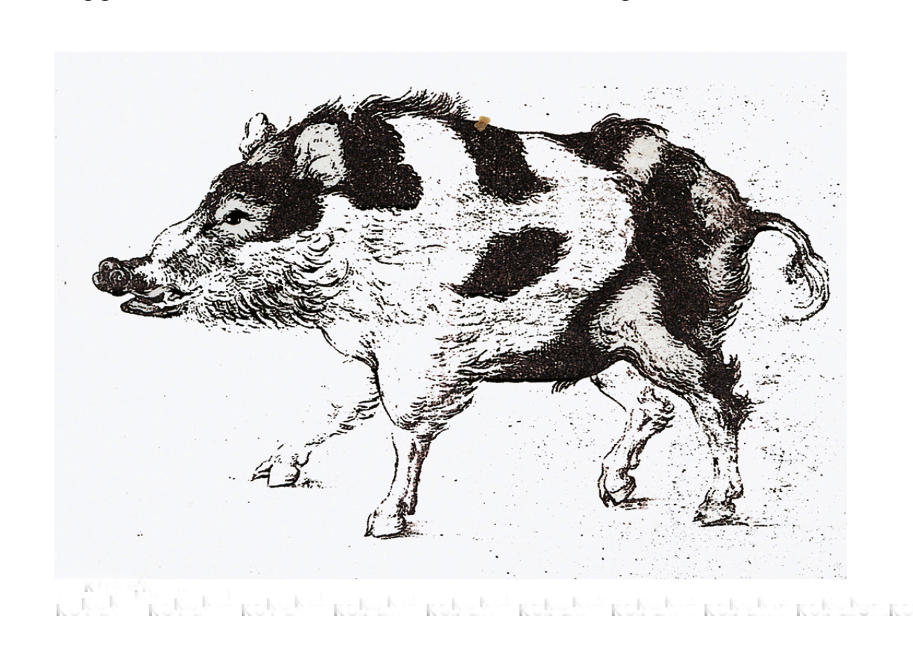 Kopergravure van een bonte keiler bij de wilde zwijnen van Ludwig Cranach 'der Ältere'