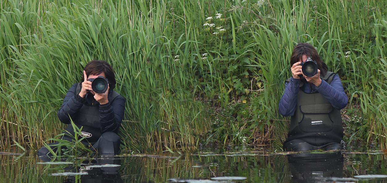 Aan de overkant staan de twee bijzondere watervogels tot aan hun middel in het water - Foto: ©Louis Fraanje