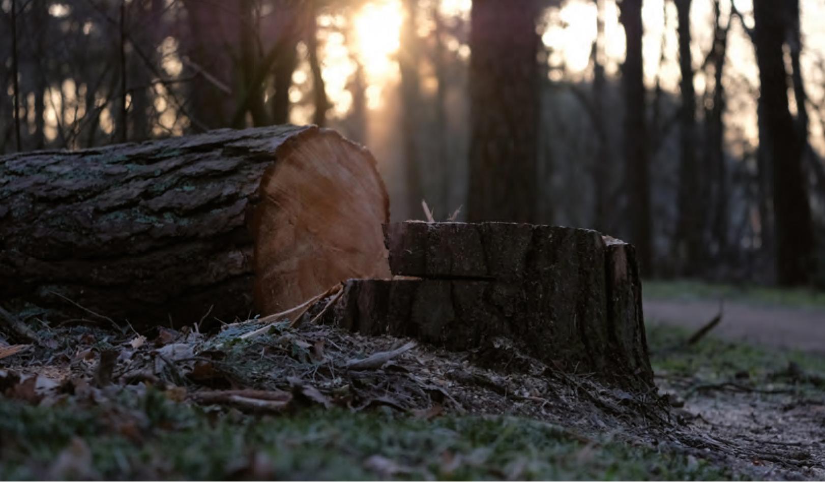 Er verdwijnt meer bos dan erbij komt - Foto: ©Leffert Oldenkamp
