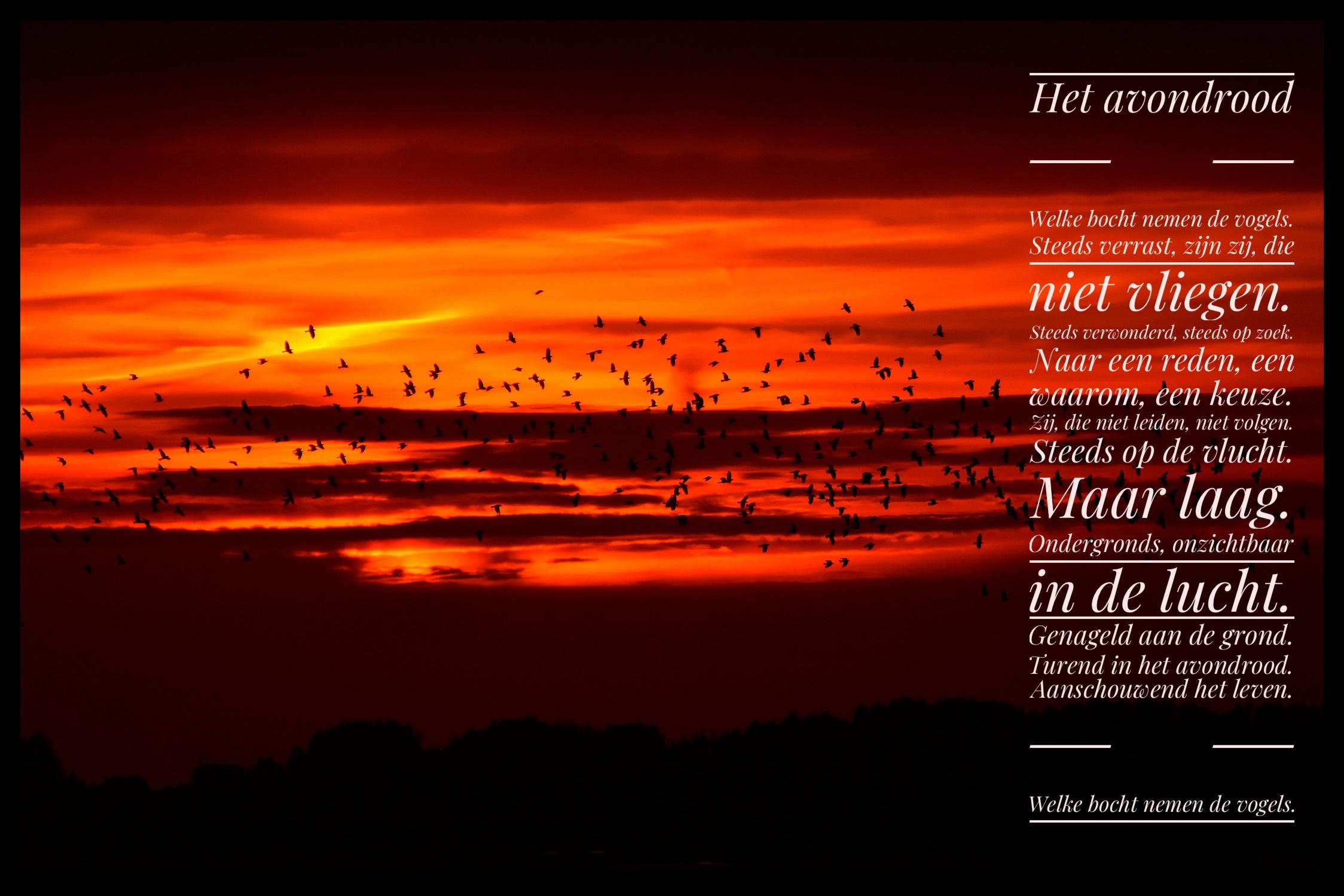 Vogels vliegen door het avondrood - Foto: ©Louis fraanje en tekst: ©Patrick Bervoets