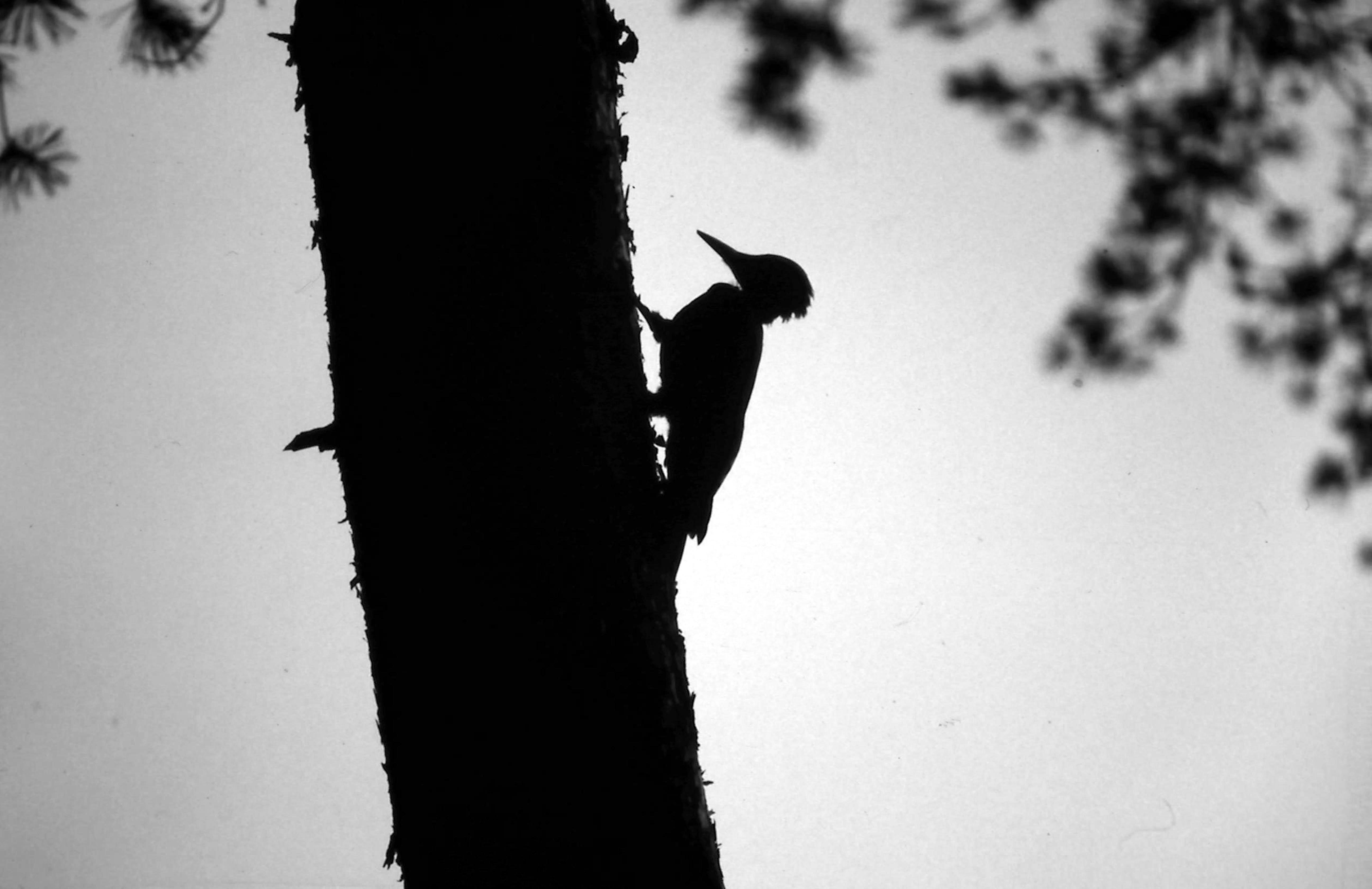 Uitgerekend die ene boom hebben ze laten staan…' – Foto: Yvonne Arentzen