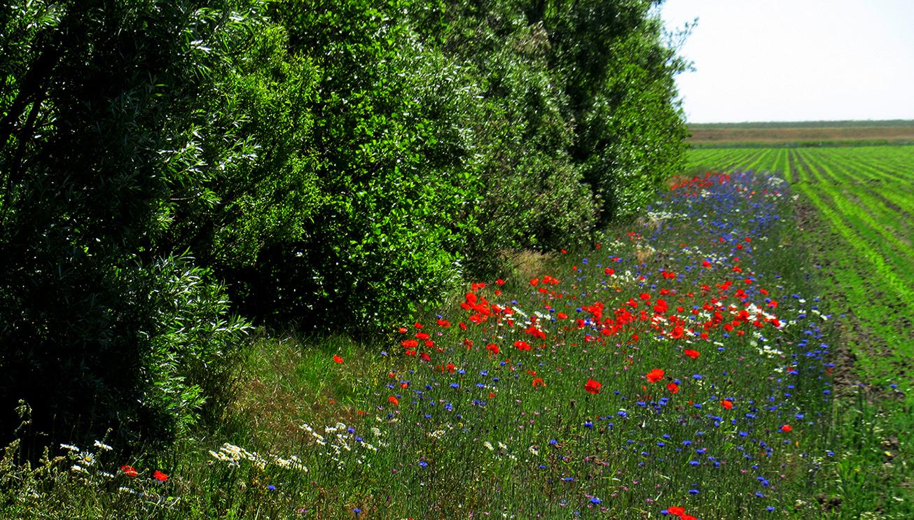 Een mooie buffer voor insecten en vogels van diverse pluimage - Foto: ©Fransien Fraanje