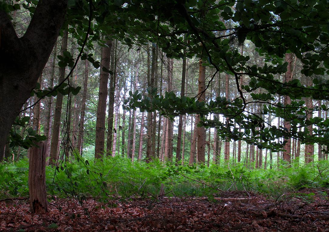 In het Paradijs komen we hier en daar ook nog stukjes oud productiebos tegen - Foto: ©Fransien Fraanje