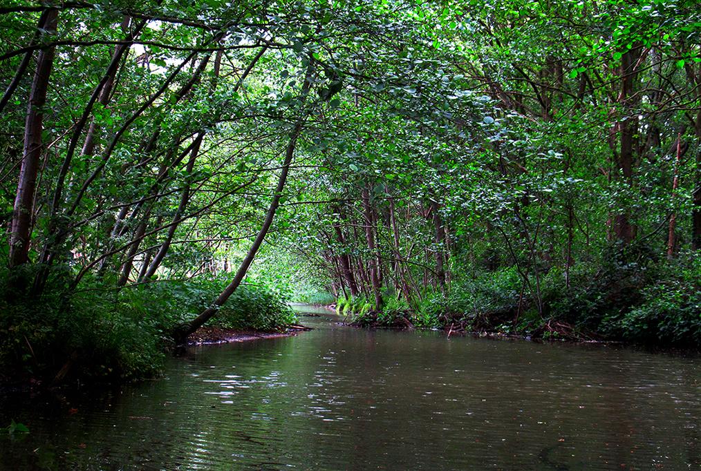 Als je zo mooi laag over de waterspiegel kijkt, dan lijkt het net of je in het Amazonegebied bent - Foto: ©Fransien Fraanje