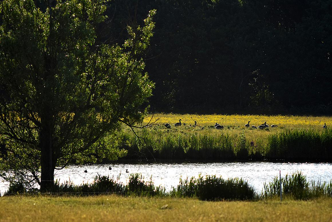 De grote plas, waarin allerlei soorten watervogels hun stekje gevonden hebben- Foto: ©Louis Fraanje