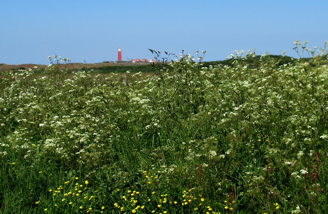 Boven de bloemenweelde uit zien we in de verte de vuurtoren - Foto: ©Fransien Fraanje