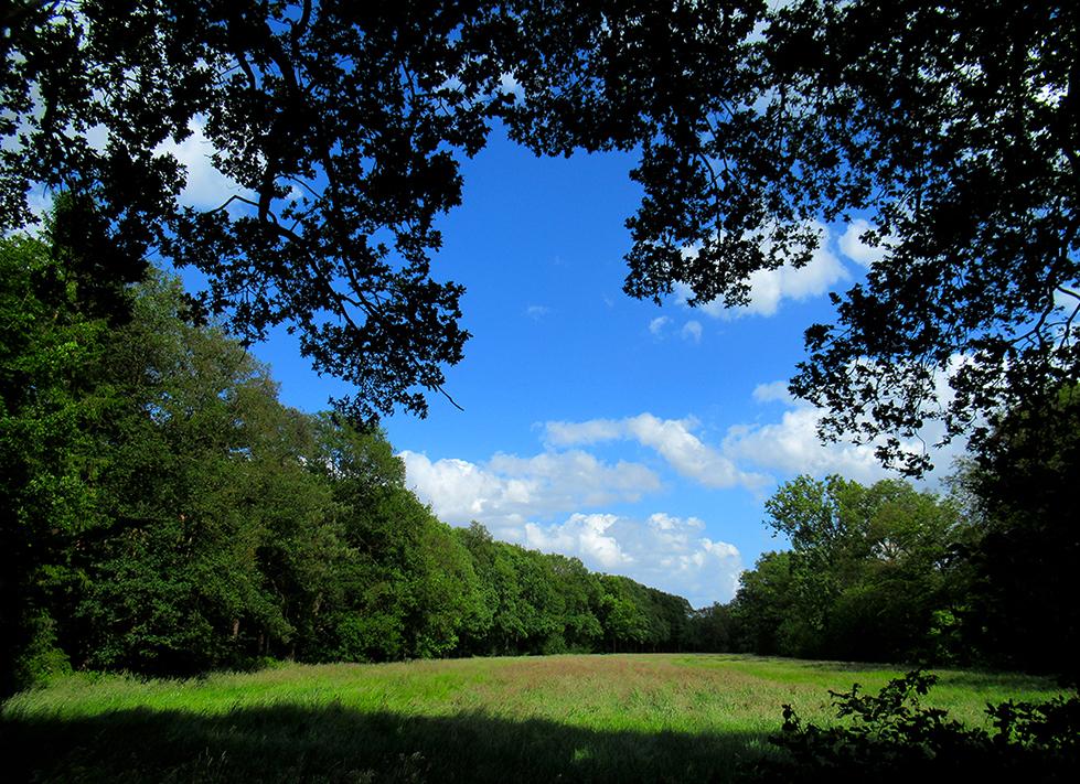Afwisselend bos met daar tussenin weilanden waar vaak het reewild komt - Foto: ©Fransien Fraanje