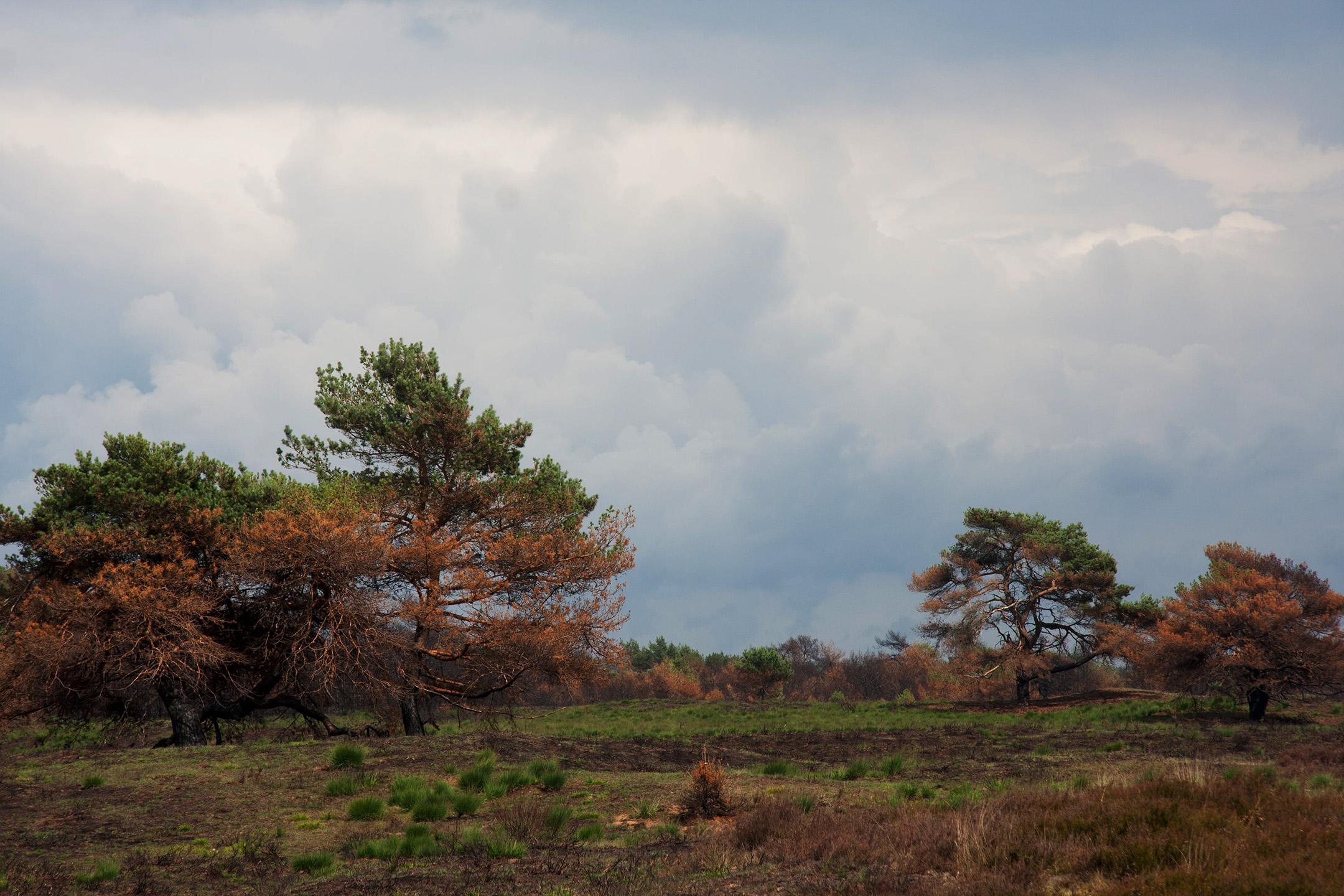 Uitzicht op rustgebied Lijkweg/Middenzand enkele weken na de brand in 2014 - Foto: Yvonne Arentzen]