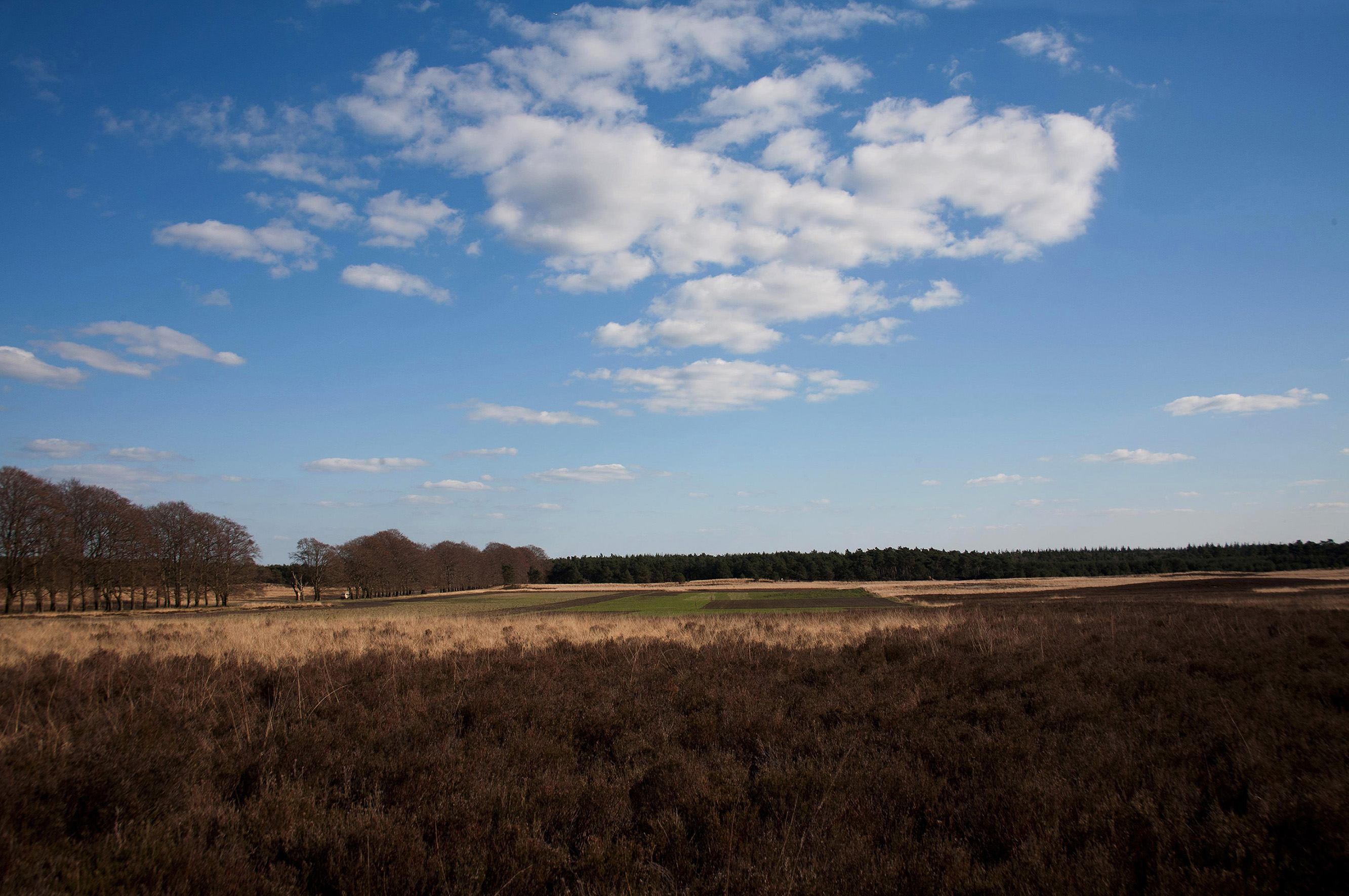 Wildweide omringd door deels vergraste heide - Foto: Yvonne Arentzen