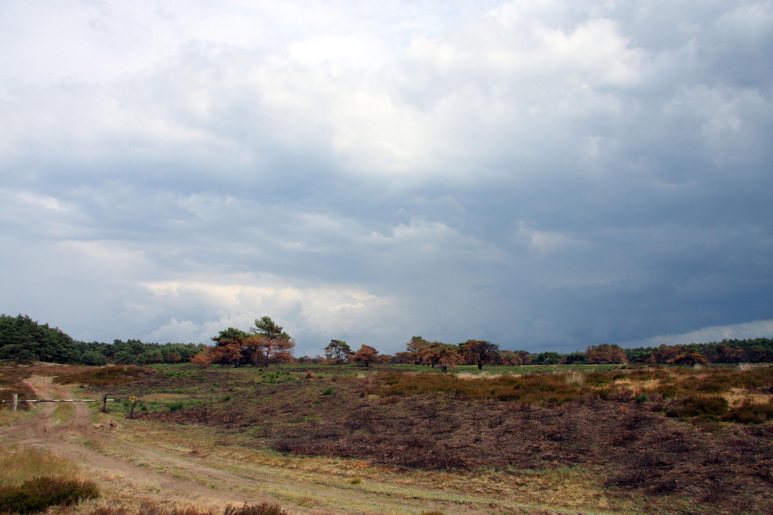 Inkijkgebied in het rustgebied Lijkweg/Middenzand na de brand in 2014 - Foto: Anja Arentzen