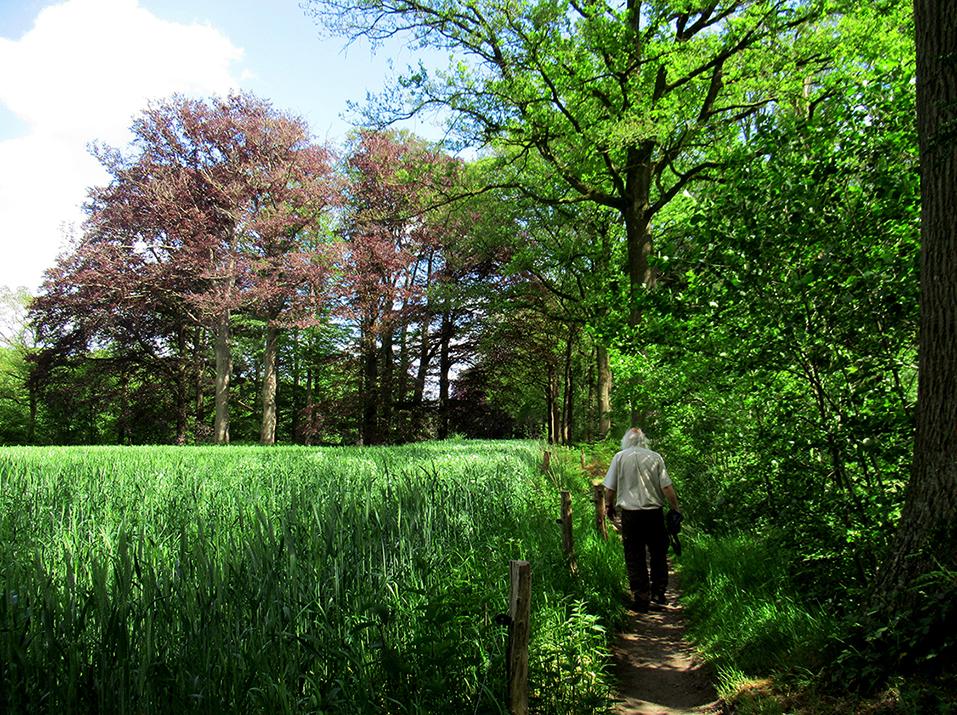 Hier en daar een graanakker met een prachtig wandelpaadje ernaast - Foto: ©Fransien Fraanje