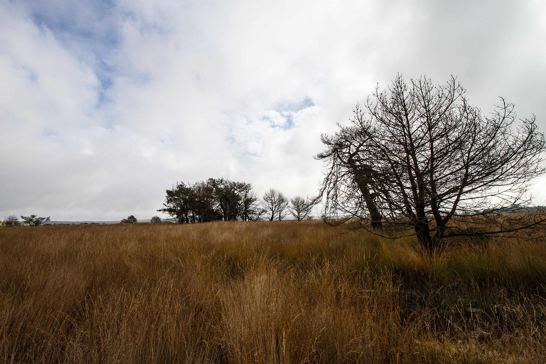 Waar heide het veld heeft geruimd voor pijpestrootje - Foto: Yvonne Arentzen