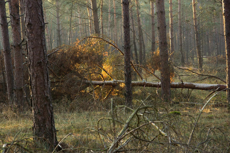 Dood hout mag blijven liggen - Foto: ©Yvonne Arentzen