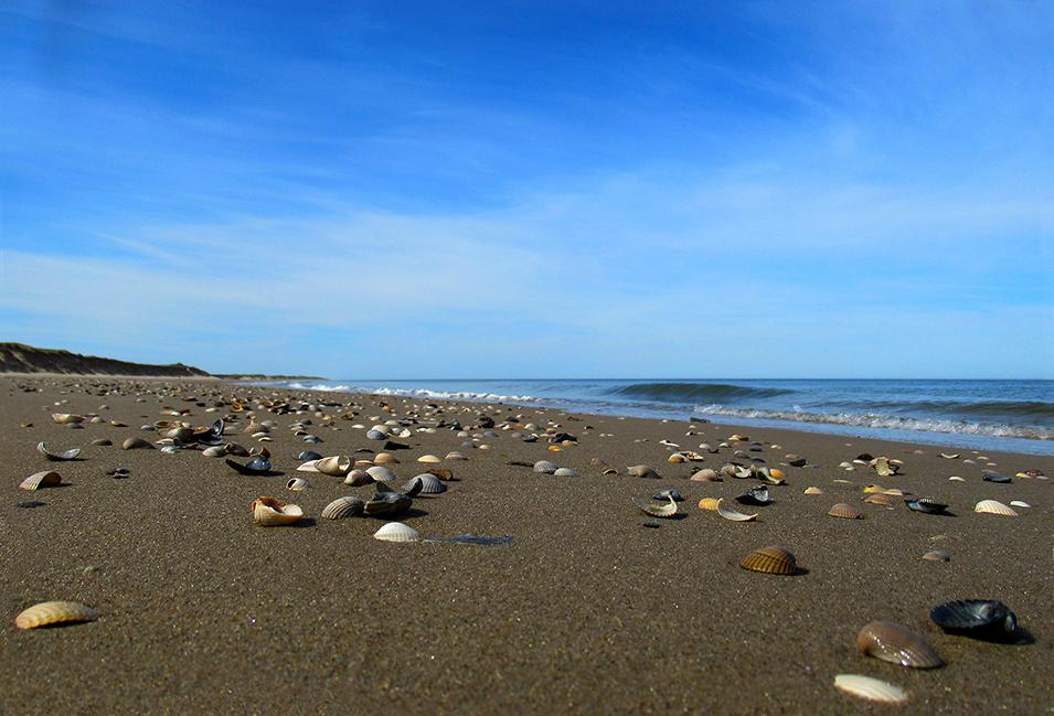 Als de zee zich heeft teruggetrokken en het eb is geworden, ligt het strand bezaaid met schelpen – Foto: ©Louis Fraanje