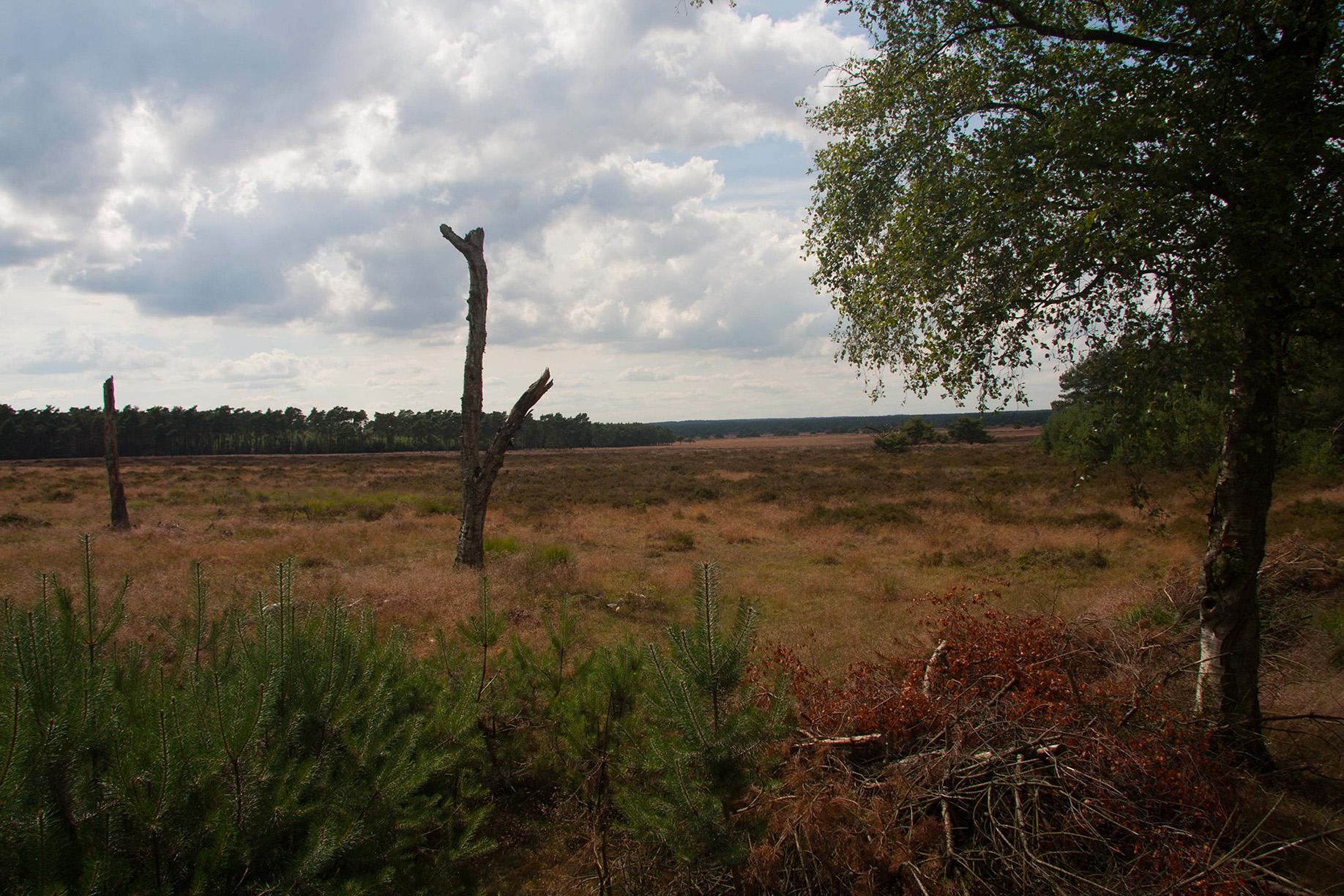 Rustgebied Bosje van Staf en Oud-Reemster Zand - Foto: Yvonne Arentzen