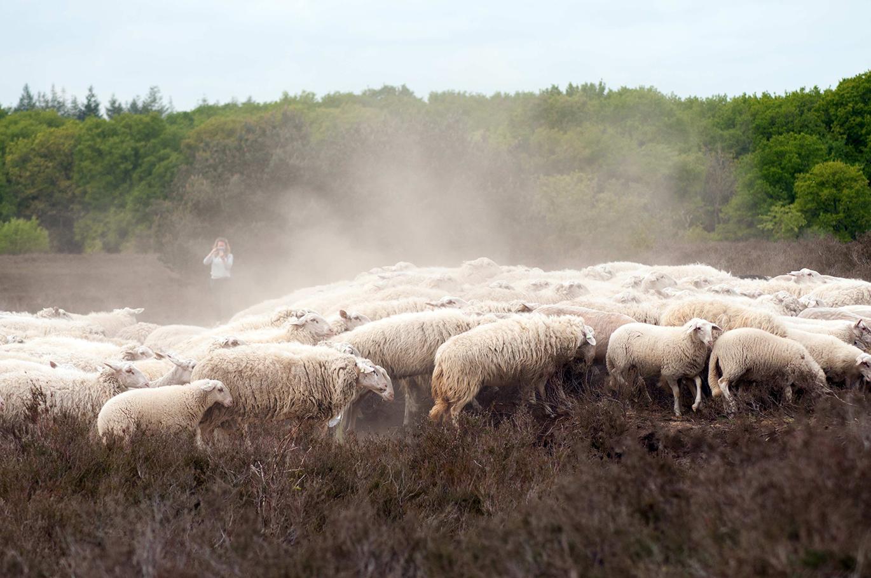Door de extreme droogte is het één grote stofwolk - Foto: ©Anja Arentzen