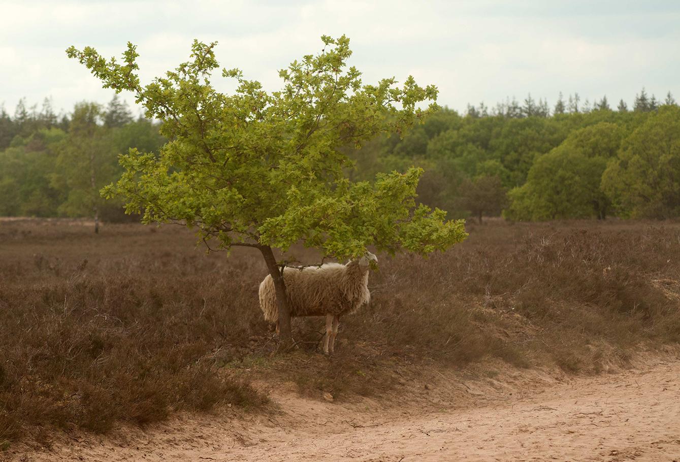 Nog een laatste achterblijver bij het eenzame boompje - Foto: ©Anja Arentzen