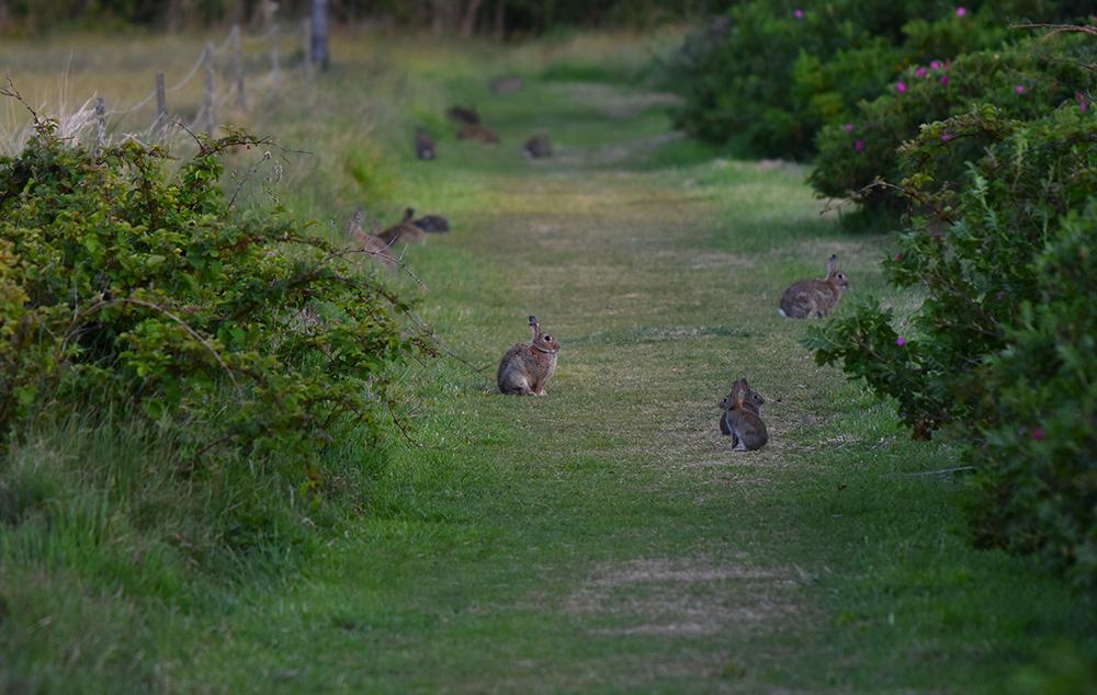 Het is bij de 'konijnen' af...