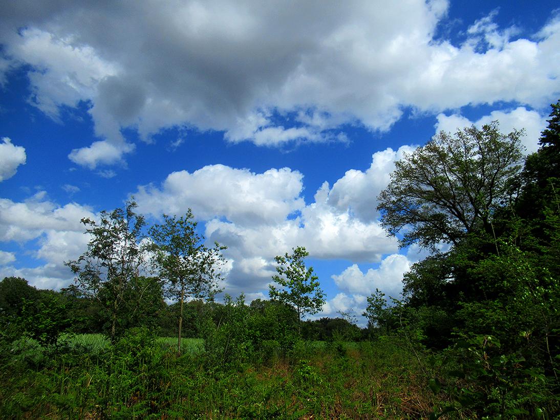 Een geleidelijke overgang van de akker naar het bos dat als rustgebied voor het wild fungeert - Foto: ©Fransien Fraanje
