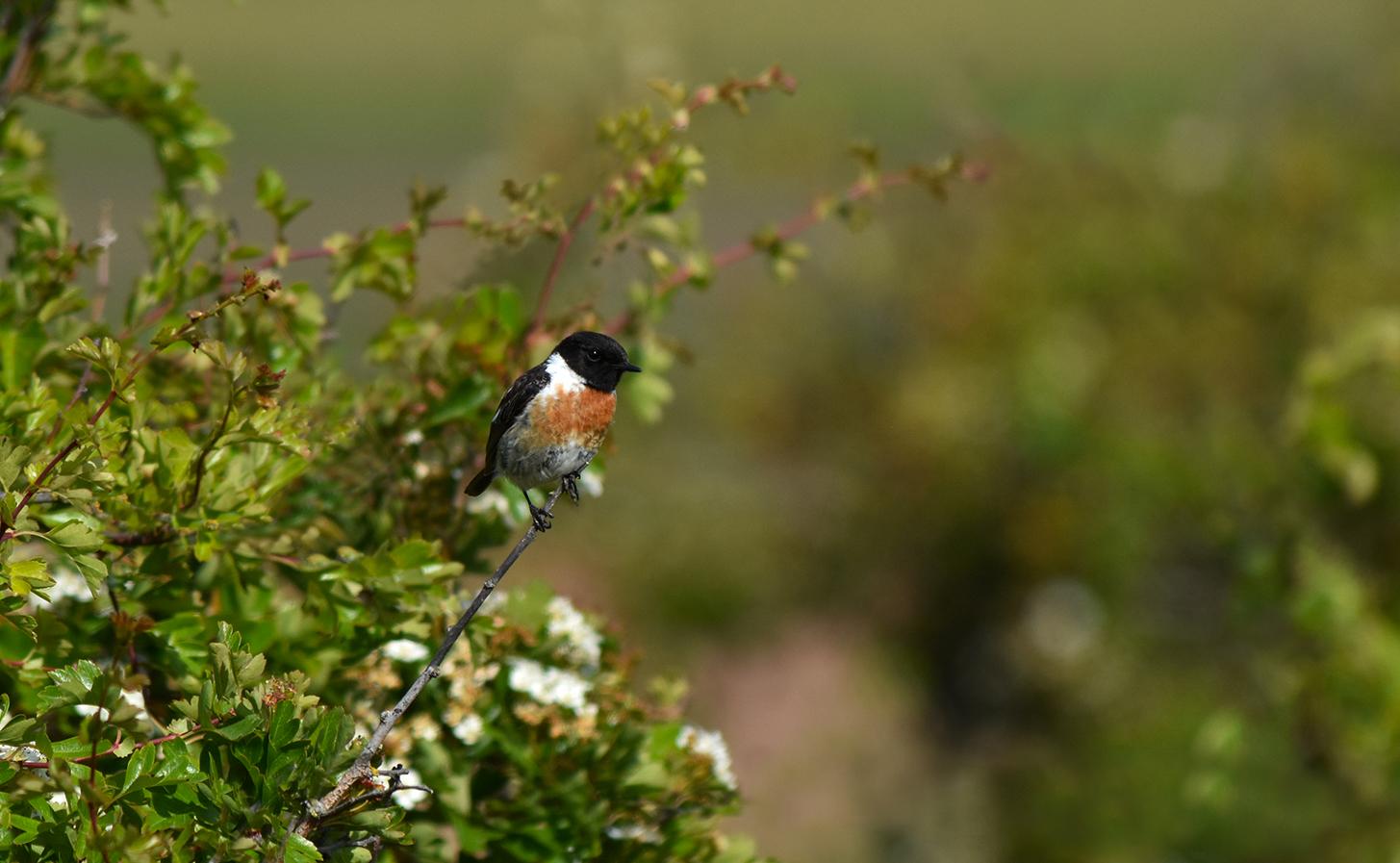 Een prachtige vogel die we hier vaak tegenkomen op onze zwerftocht – Foto: ©Louis Fraanje