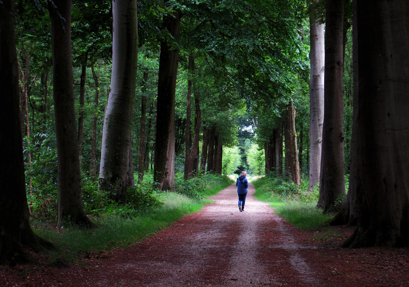 Het is toch heerlijk wandelen door zo'n oude beukenlaan, puur genieten van de natuur - Foto: © Louis Fraanje