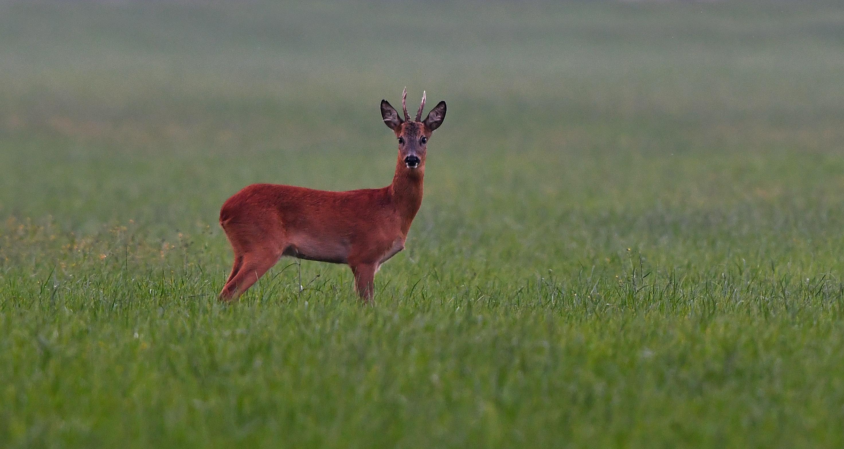 Al blijft hij alert op zijn omgeving, want... je weet maar nooit – Foto: ©Louis Fraanje