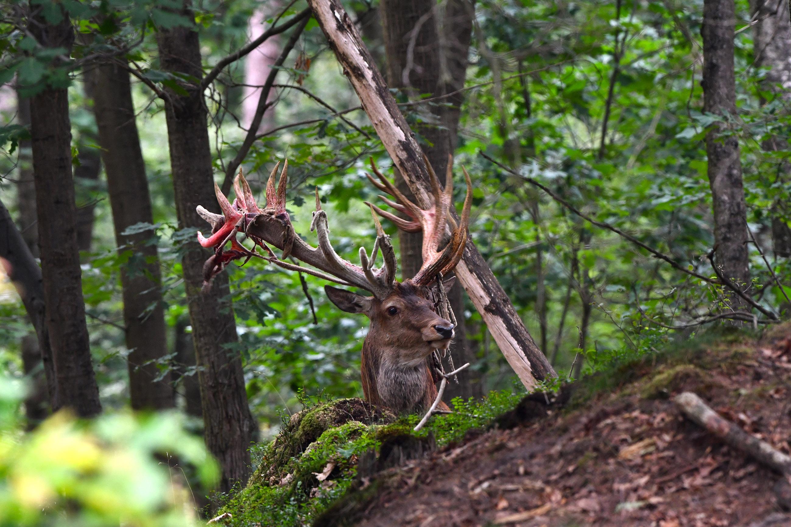 Zo troffen wij Hubertus aan op de heuvel in het bos – Foto: ©Louis Fraanje